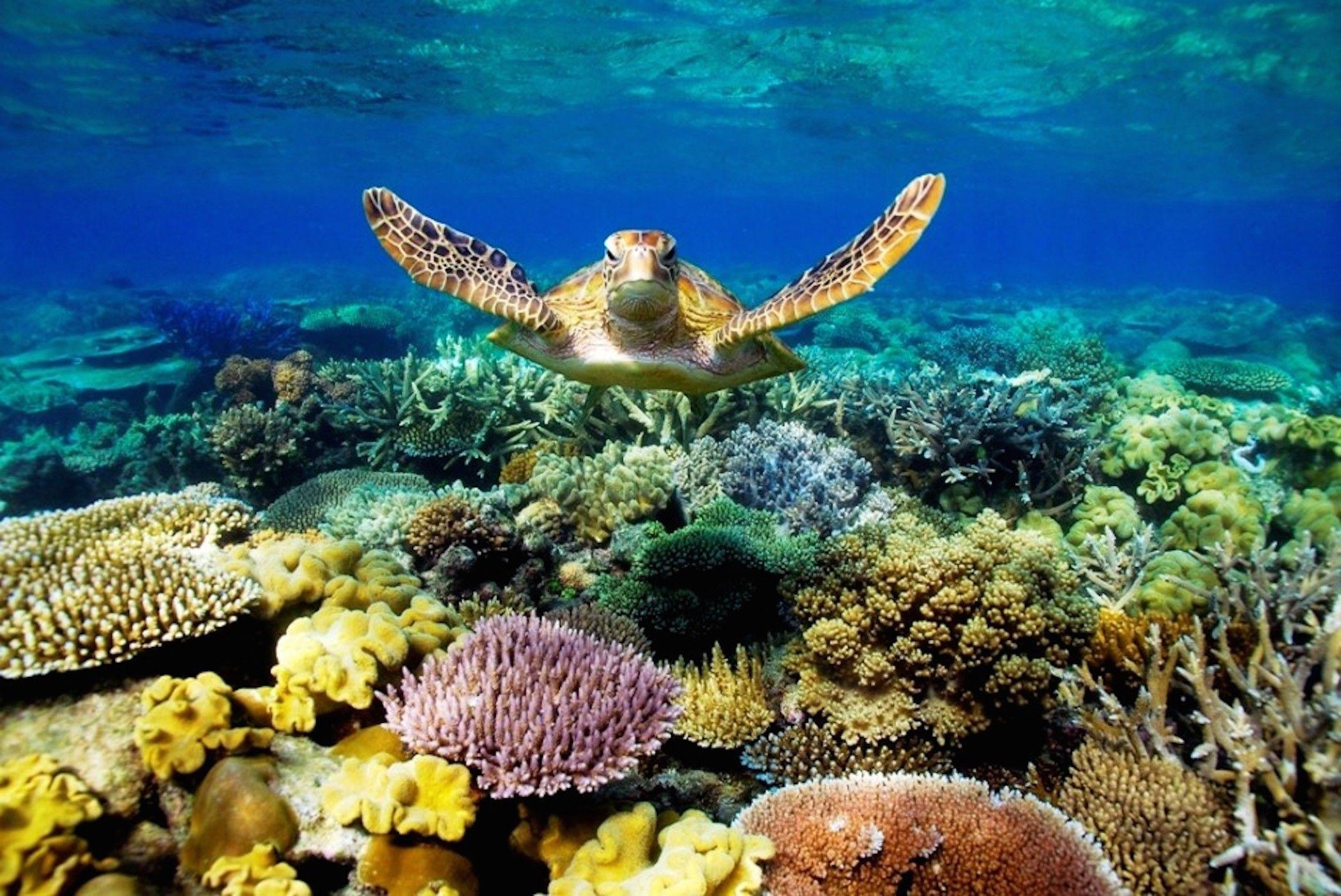3020x2007 Tropical Coral Reef Fish Ocean Aquarium Live Wallpaper Android