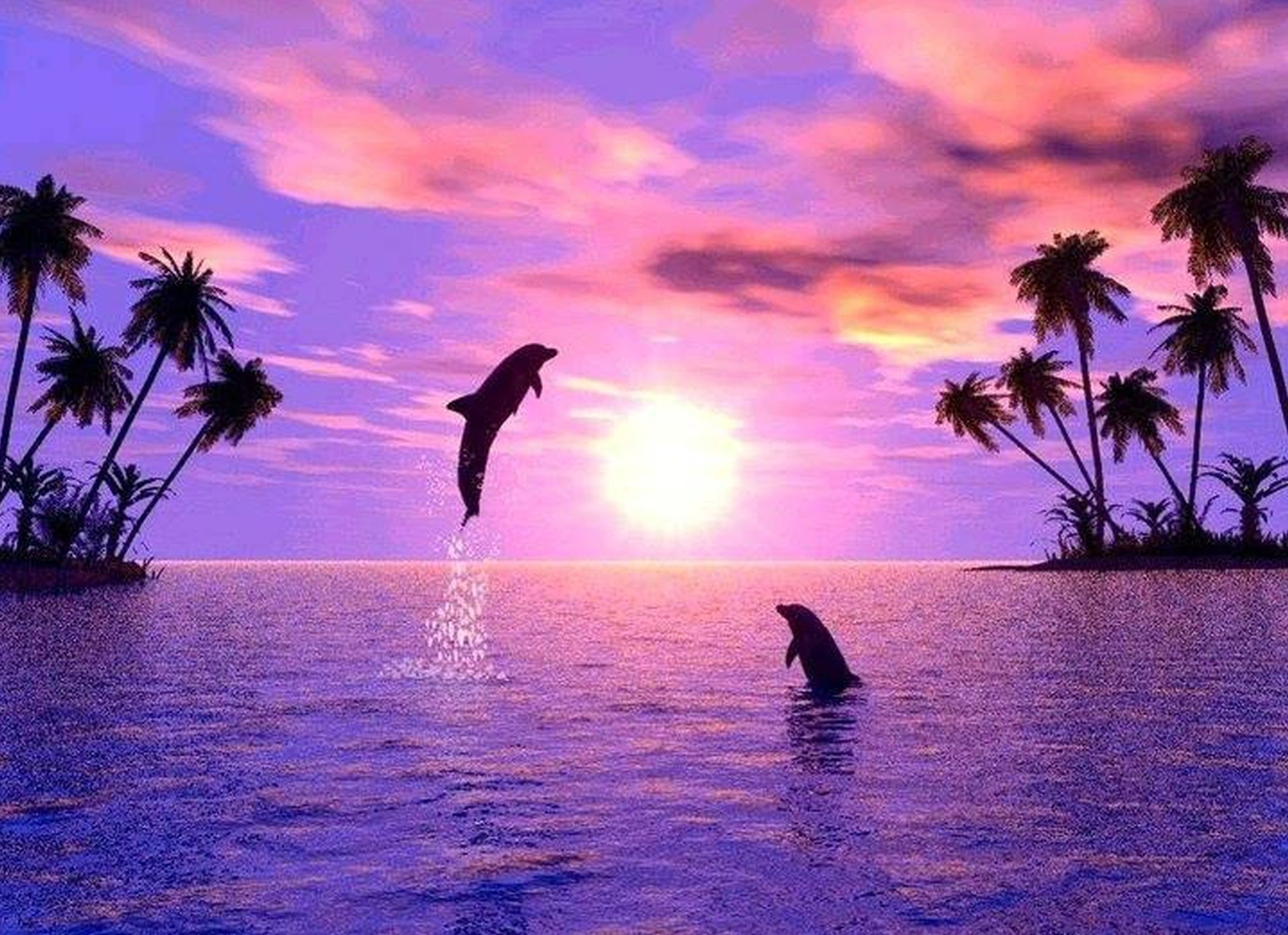 Cute Dolphins Wallpapers Top Free Cute Dolphins Backgrounds Wallpaperaccess Hd wallpaper dolphins sunset sky pink