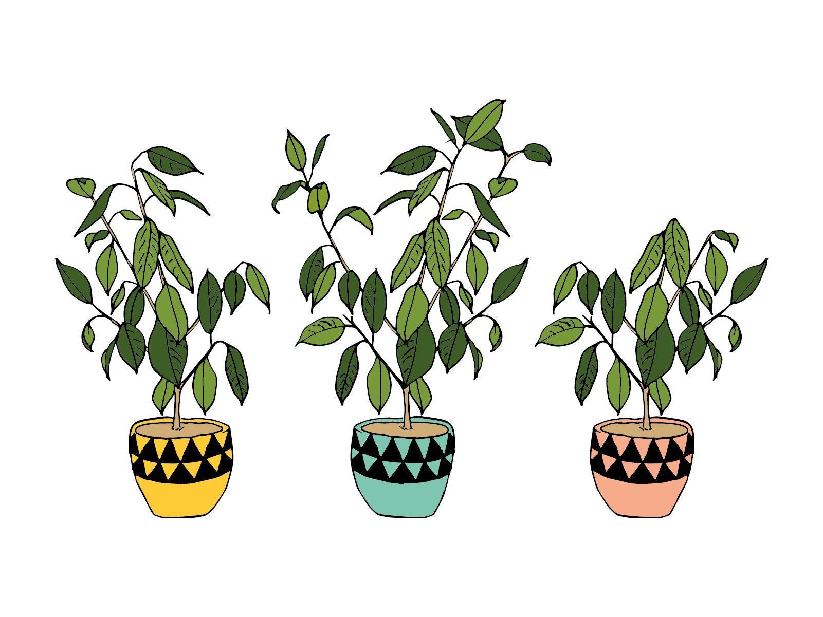 Plant Aesthetic Desktop Wallpapers Top Free Plant Aesthetic Desktop Backgrounds Wallpaperaccess
