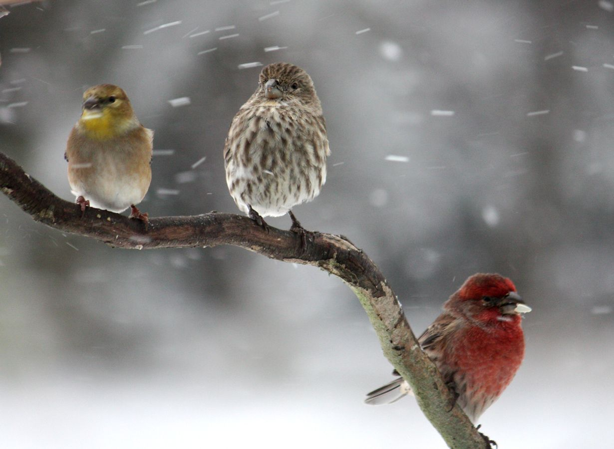 Winter Rain Wallpapers - Top Free Winter Rain Backgrounds