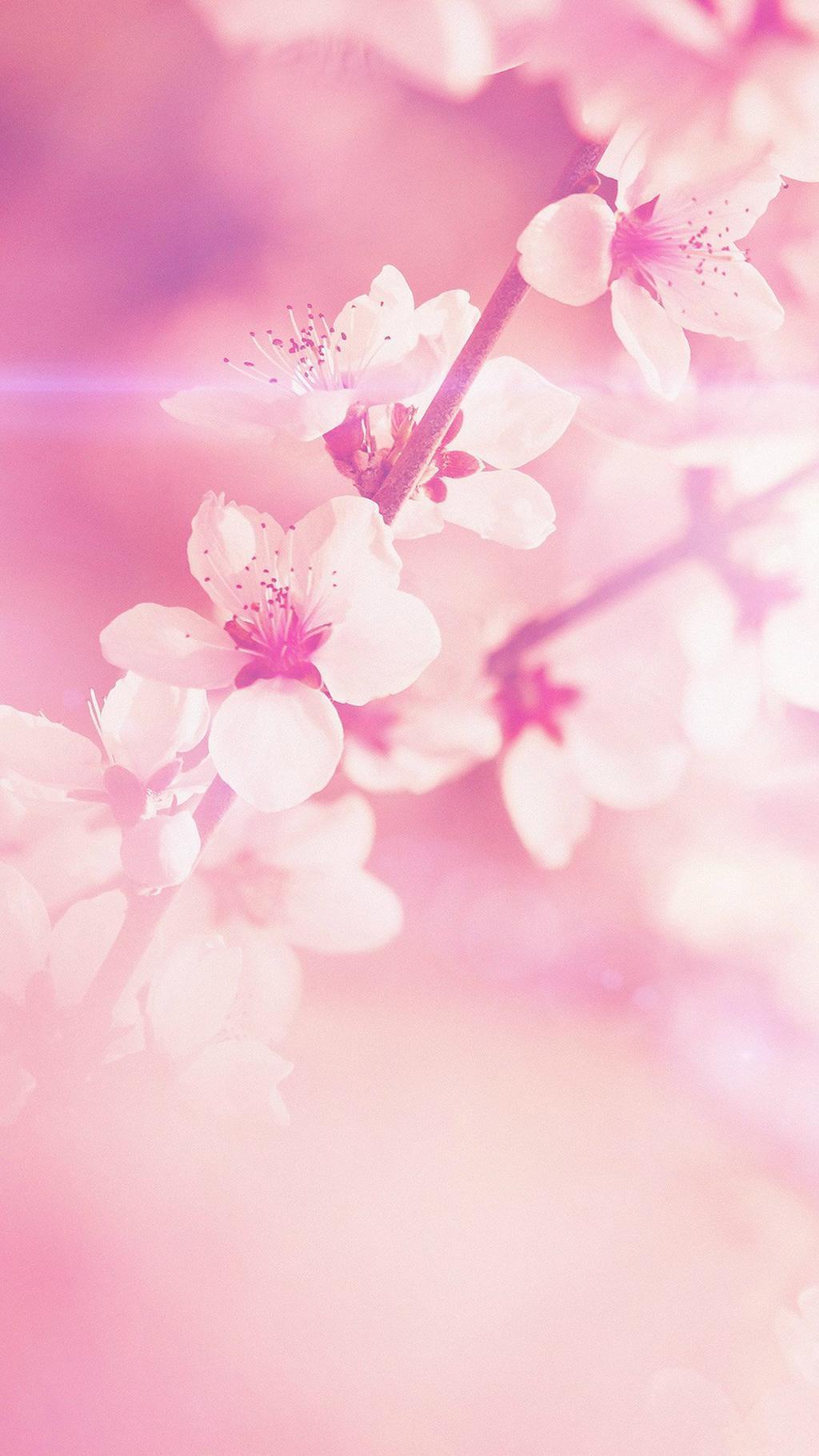 Wallpaper tumblr hd rosa