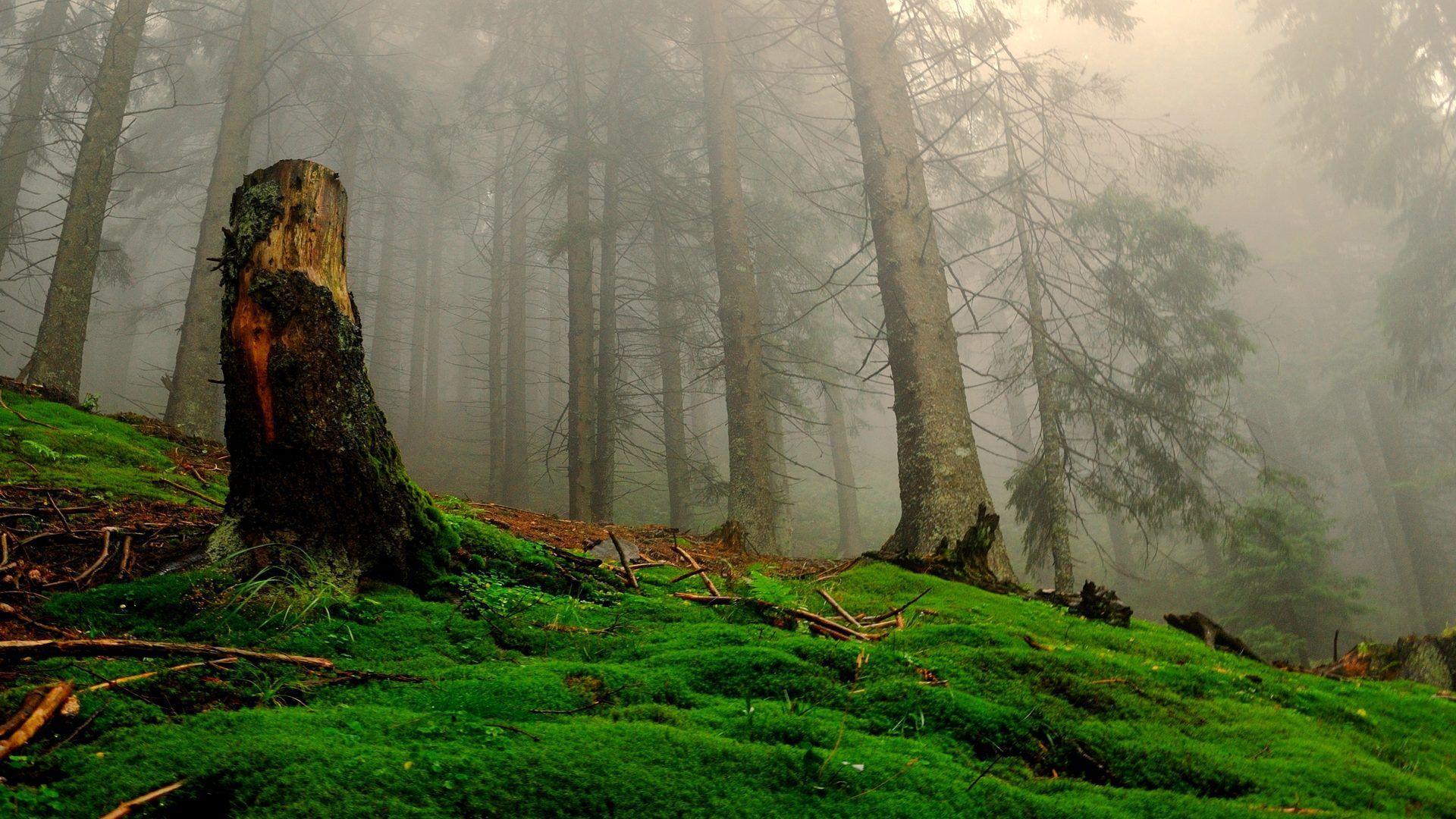 1920x1080 Enchanted Forest Background Tải xuống miễn phí