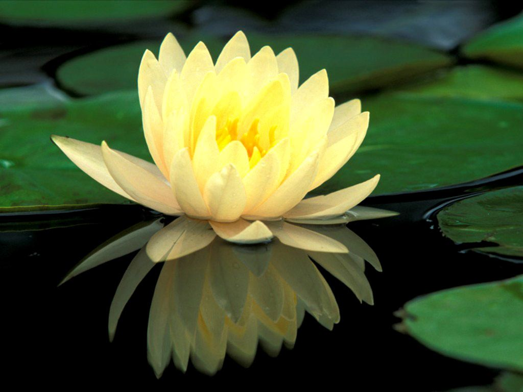 55 best free green lotus wallpapers wallpaperaccess 1680x1050 flower flori purple flower green lotus desktop wallpaper 3d hd 169 izmirmasajfo
