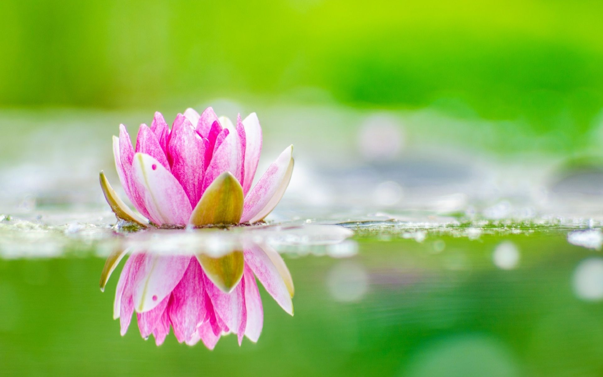 Green Lotus Wallpapers Top Free Green Lotus Backgrounds