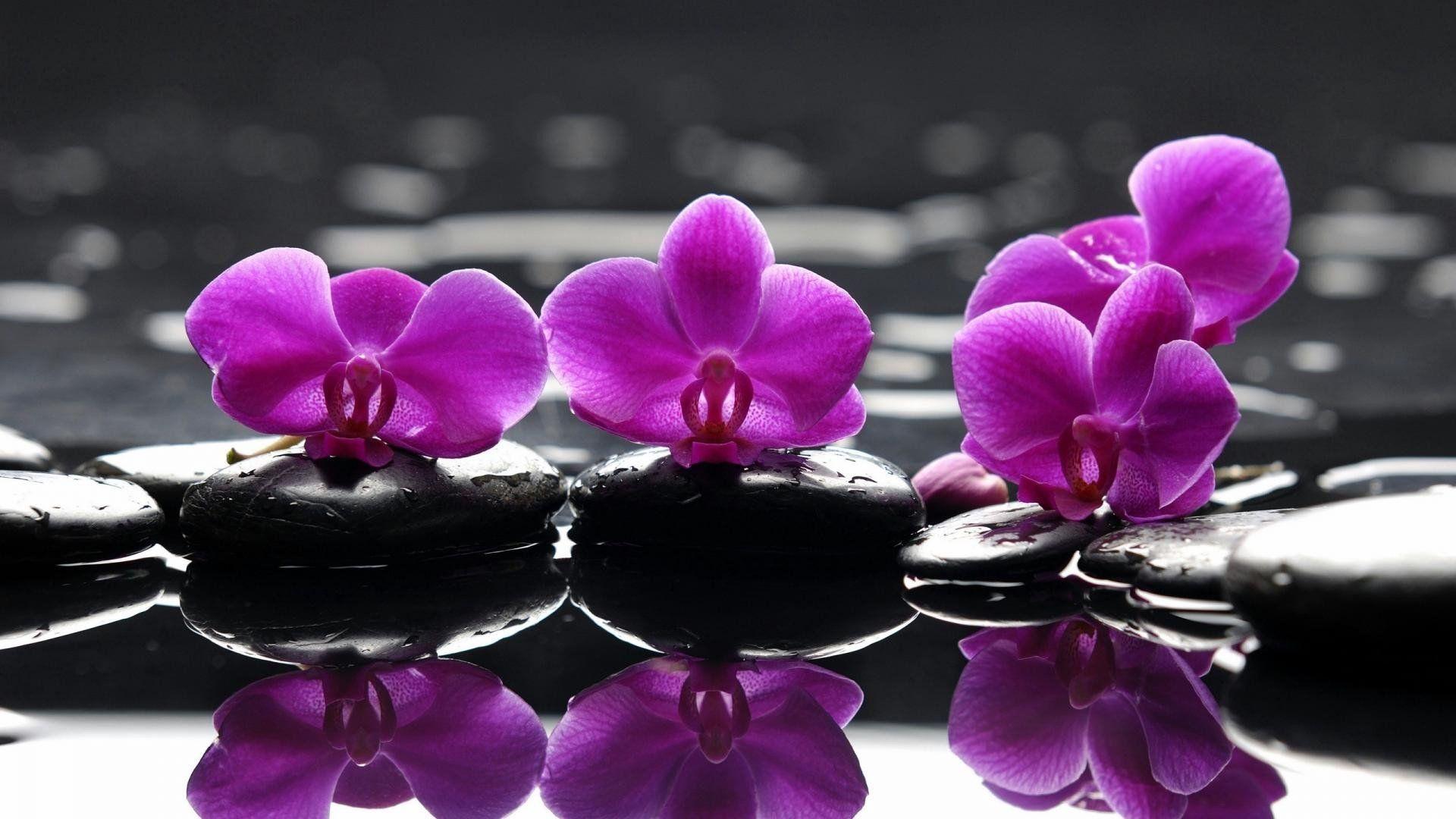 Orchids in Water Desktop Wallpapers ...