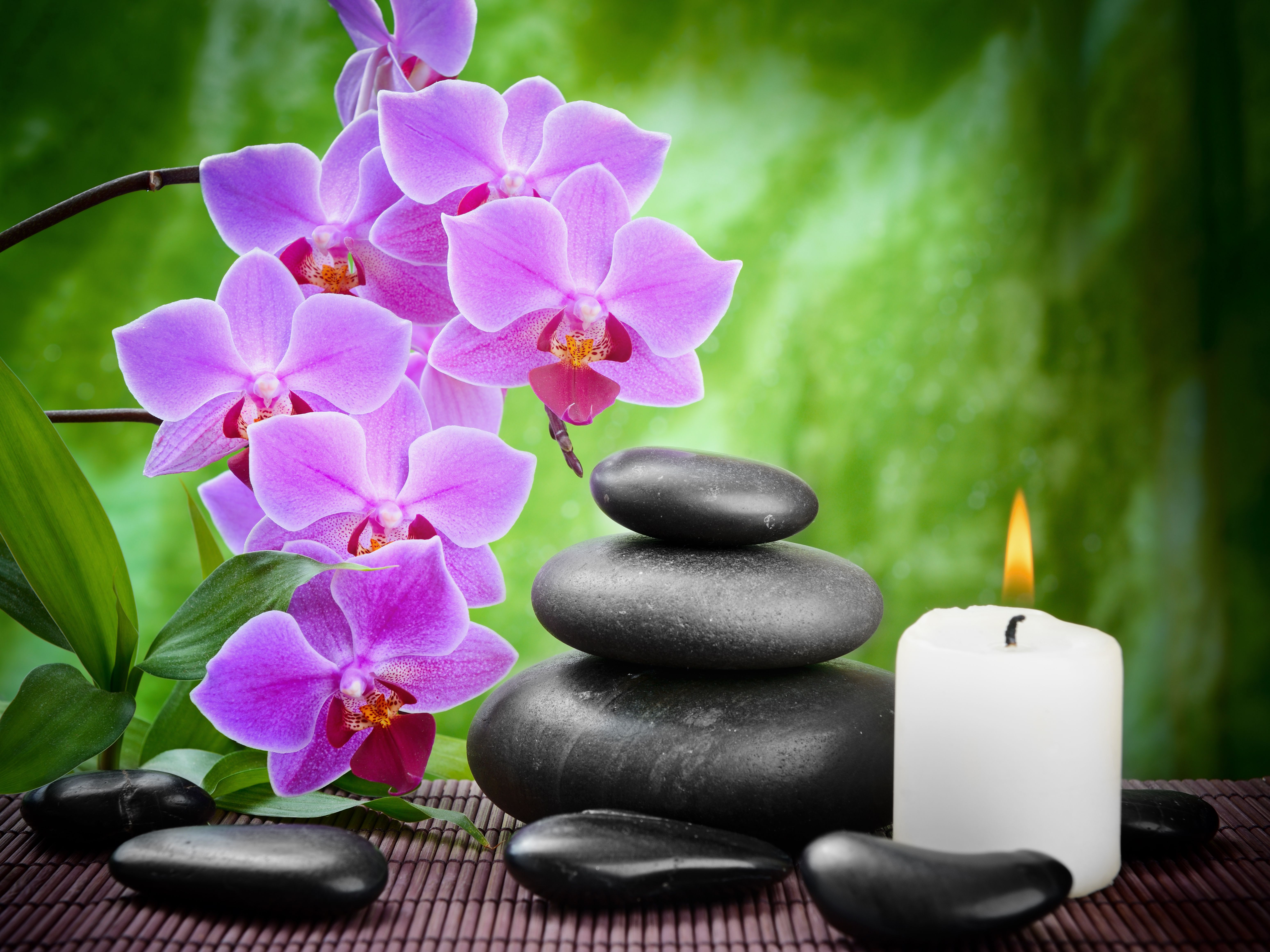 Spa Orchids Wallpapers Top Free Spa Orchids Backgrounds Wallpaperaccess