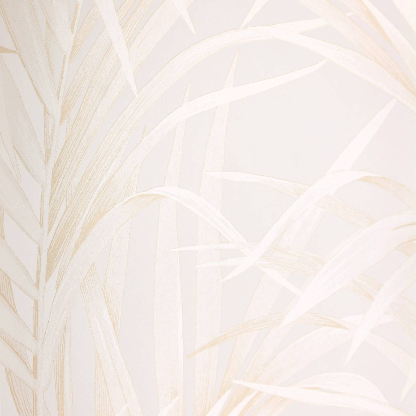 Beige And White Wallpapers Top Free Beige And White