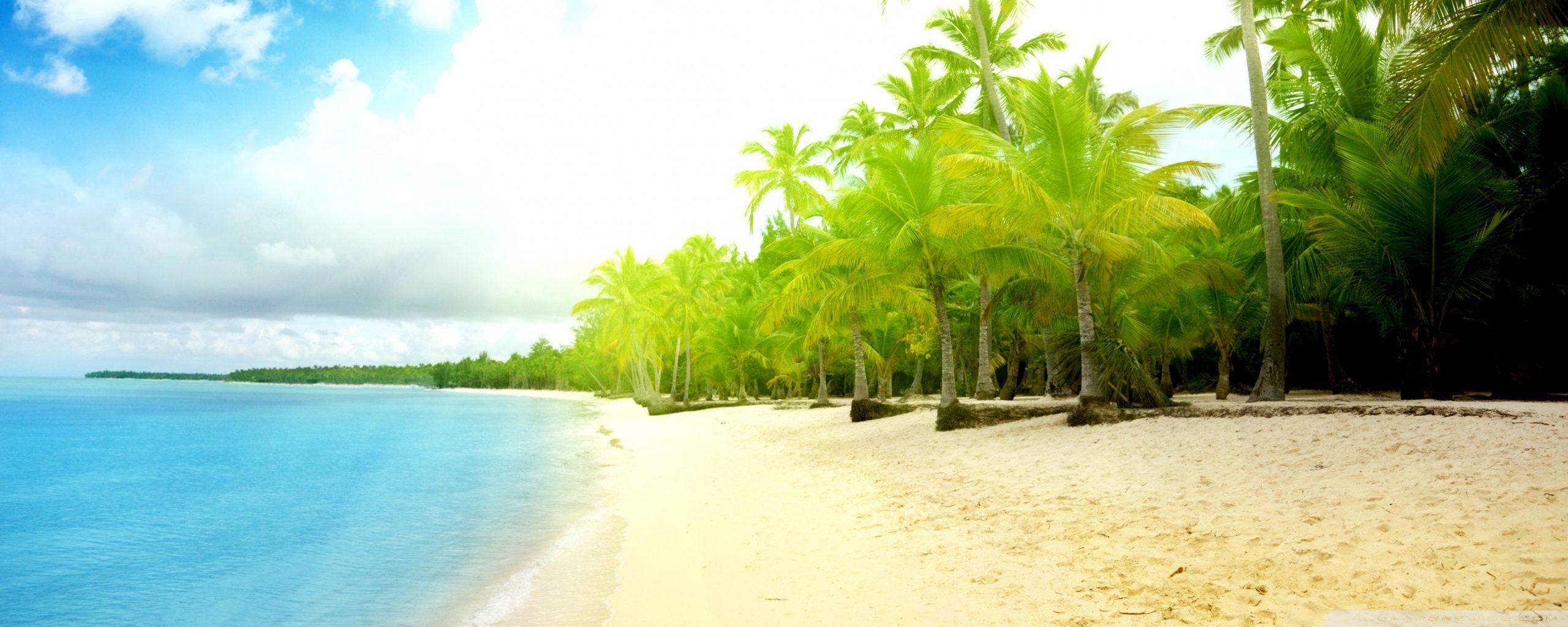 Palm Tree Beach 4k Hd Desktop Wallpaper For 4k Ultra Hd Tv: 16K Ultra HD Beach Wallpapers