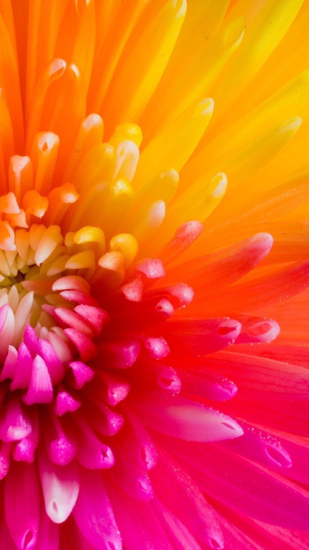 Flower Iphone 6 Plus Wallpapers Top Free Flower Iphone 6
