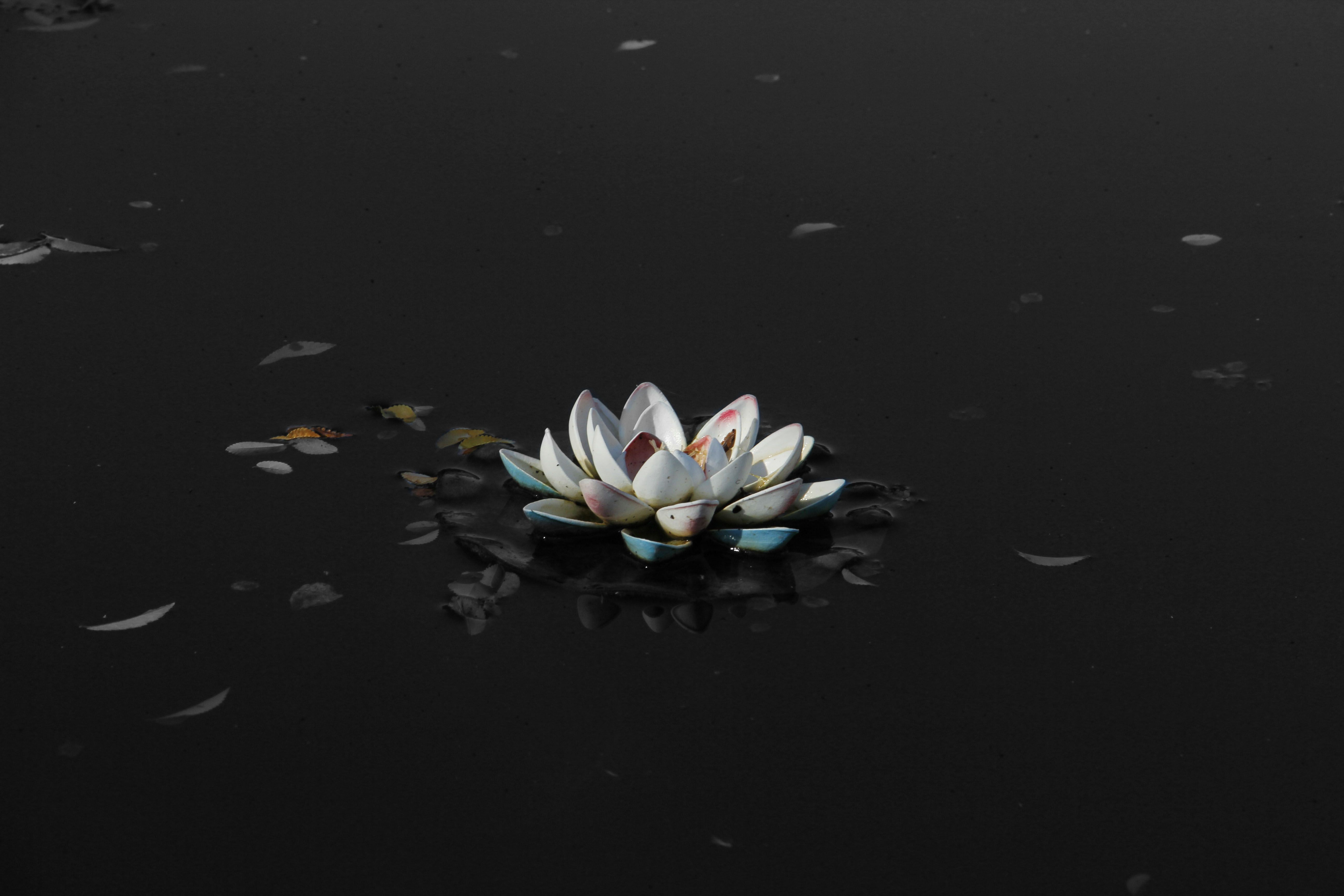 White Lotus Graphic Art Wallpapers Top Free White Lotus Graphic