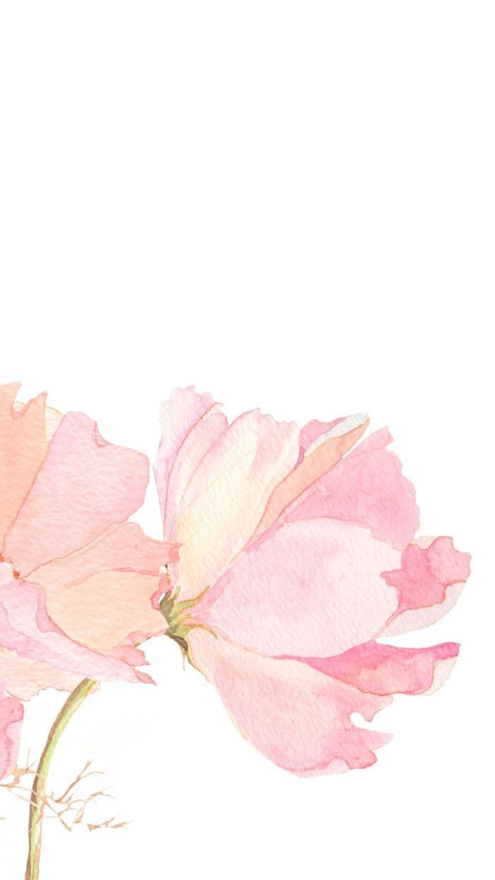 Light Pink Floral Iphone Wallpapers Top Free Light Pink