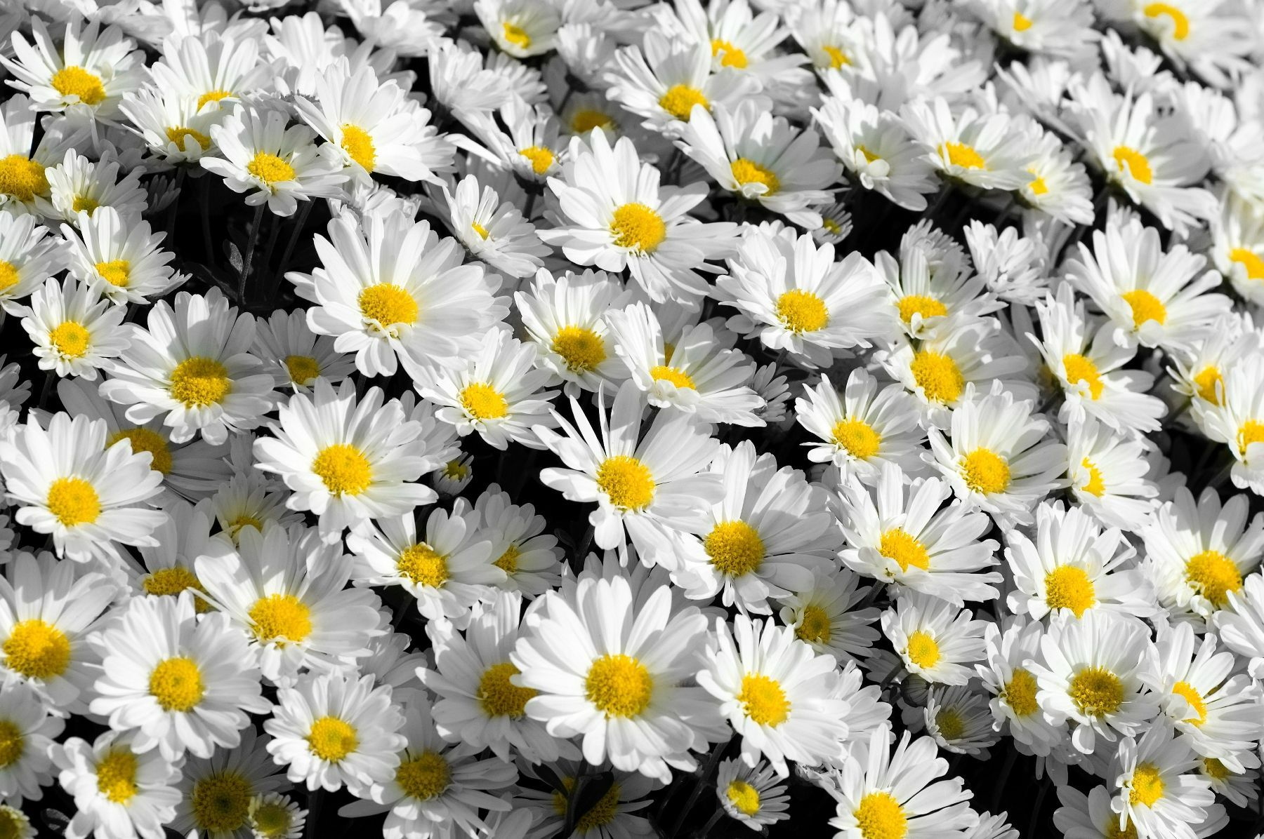 Tumblr Flowers Desktop Wallpapers Top Free Tumblr Flowers