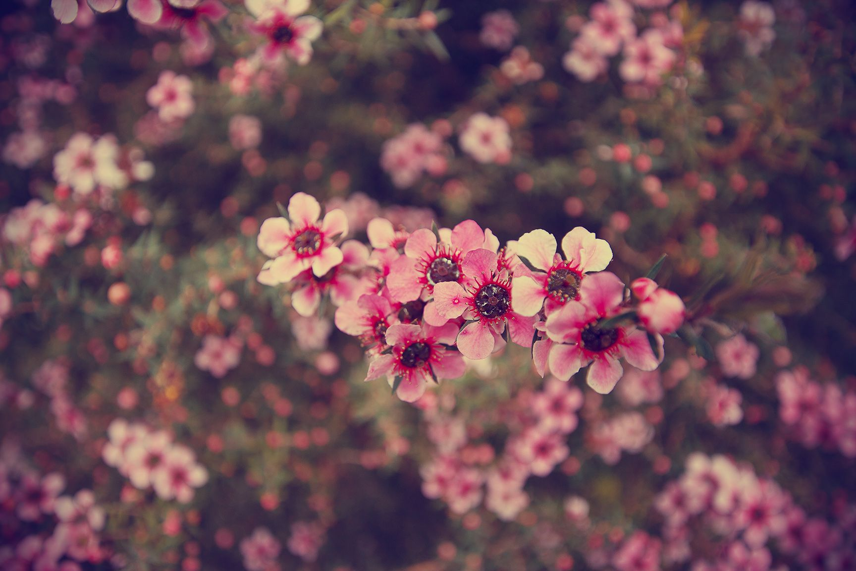 Tumblr Flowers Desktop Wallpapers Top Free Tumblr Flowers