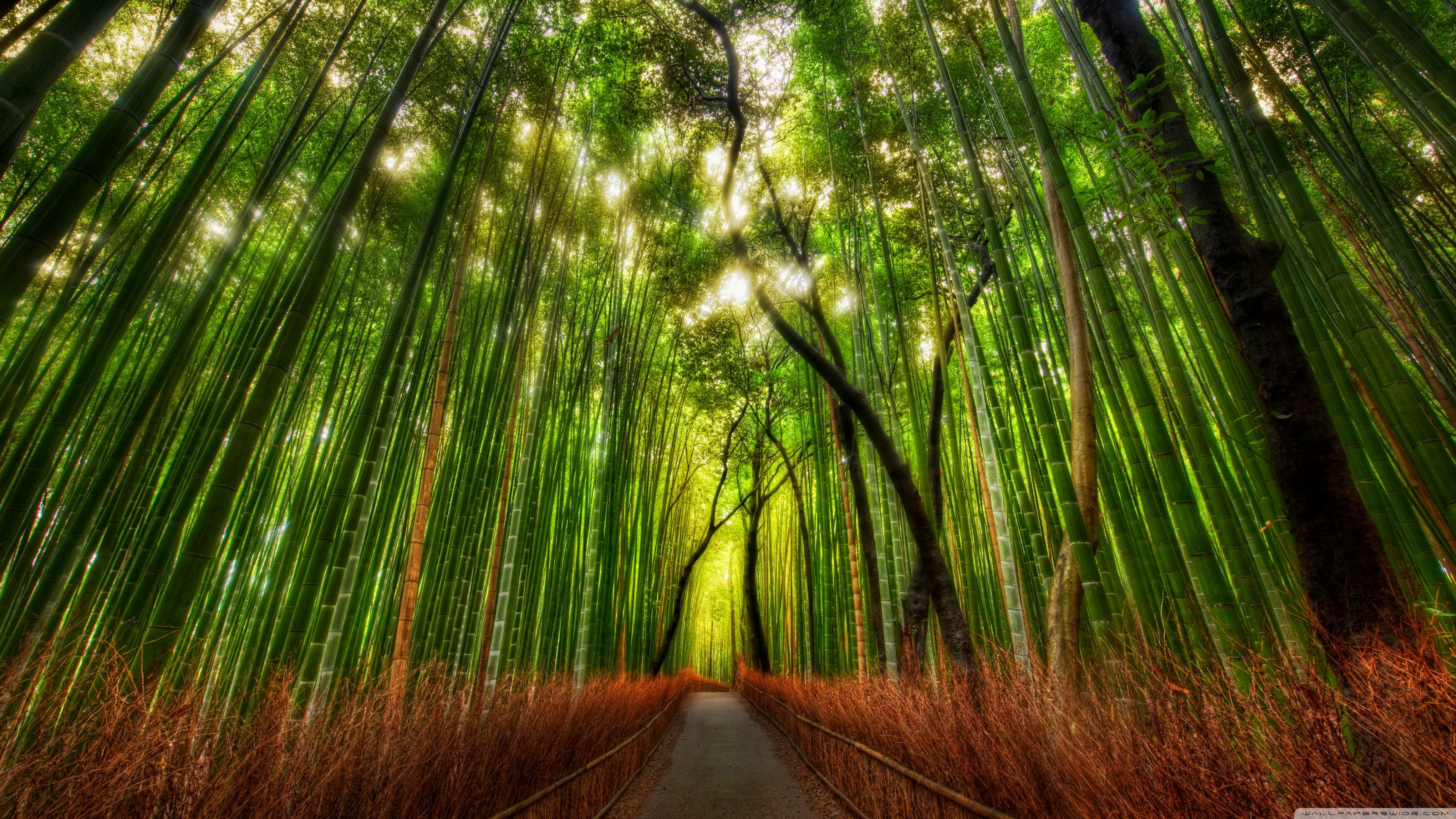 40 Best Free Bamboo Dual Screen Wallpapers Wallpaperaccess
