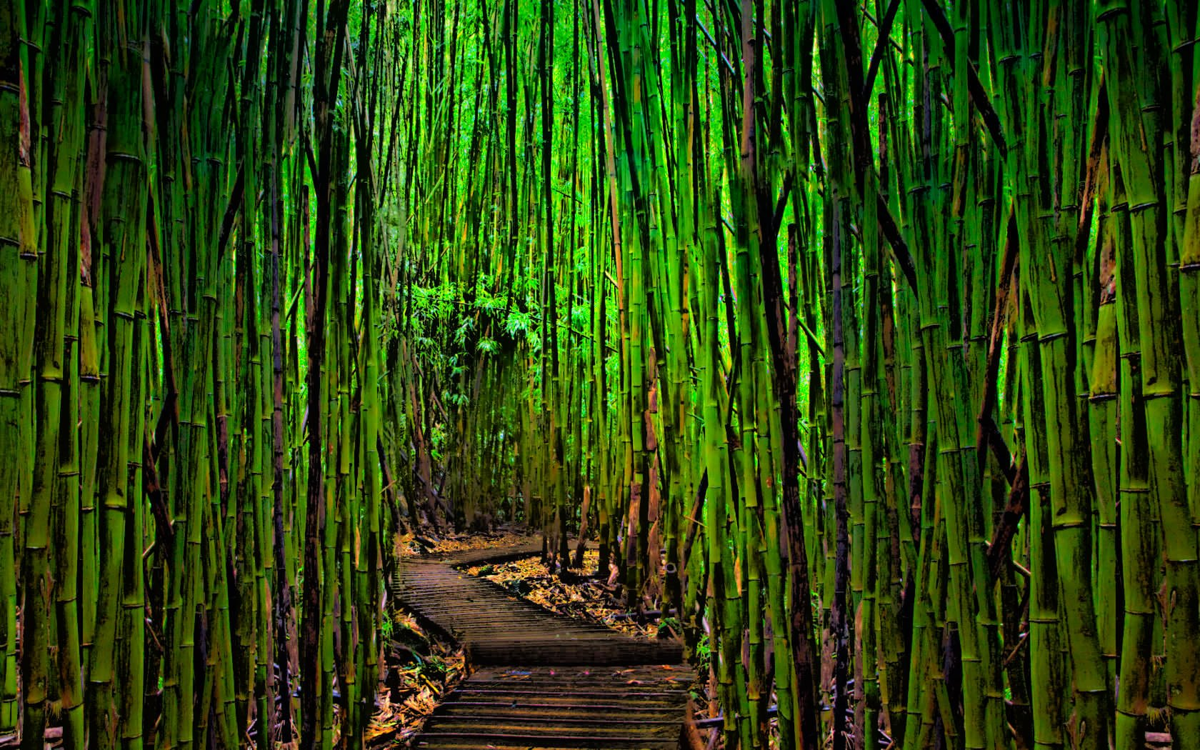 Wallpaper Bamboo