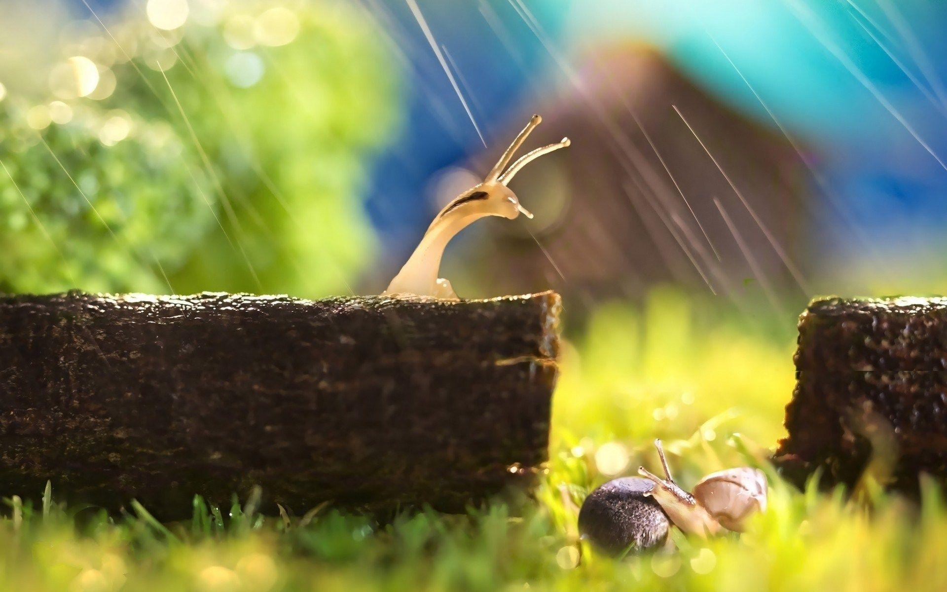 Rain Animal Wallpapers Top Free Rain Animal Backgrounds Wallpaperaccess