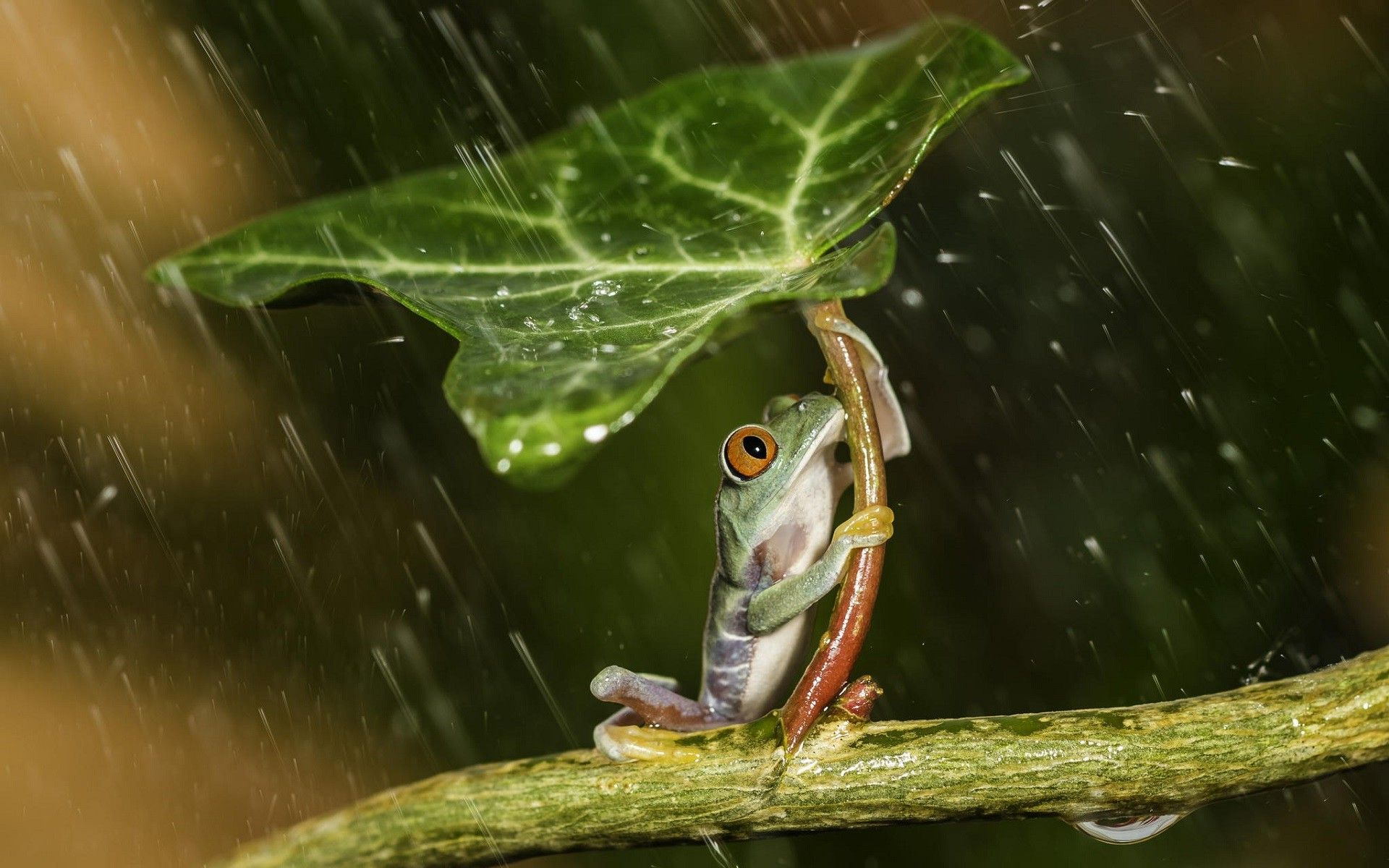 37 Best Free Rain Animal Wallpapers