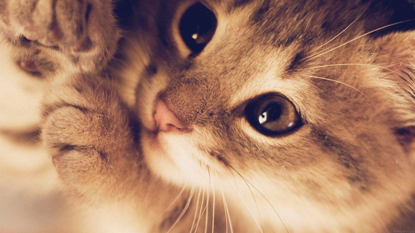Cat Laptop Wallpapers Top Free Cat Laptop Backgrounds Wallpaperaccess