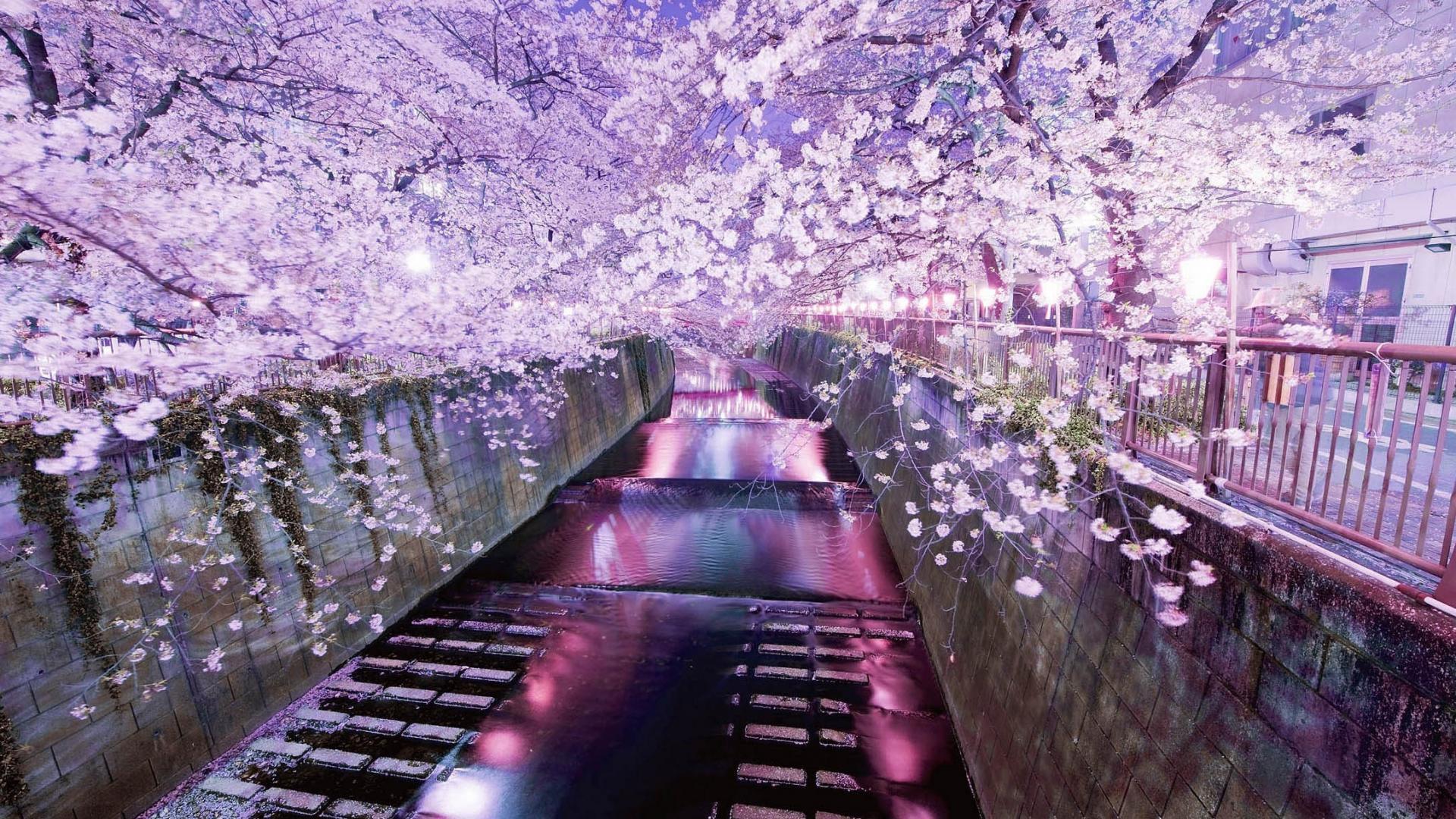 Japan Laptop Wallpapers Top Free Japan Laptop Backgrounds Wallpaperaccess