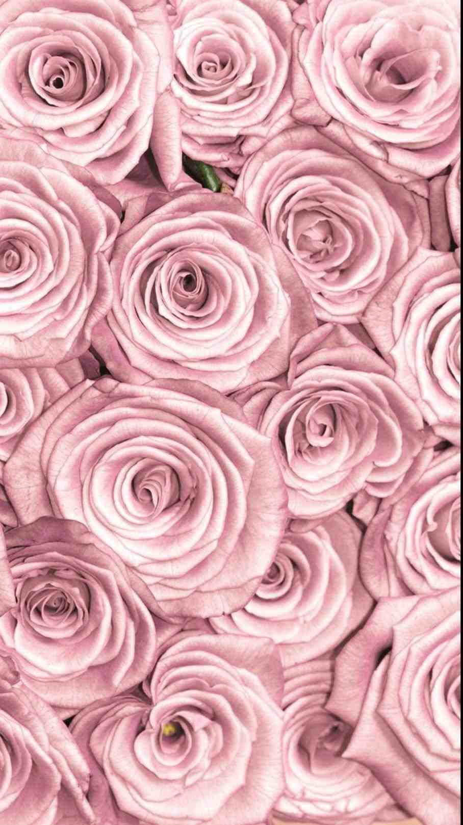 Aesthetic Rose Computer Wallpapers Top Free Aesthetic Rose