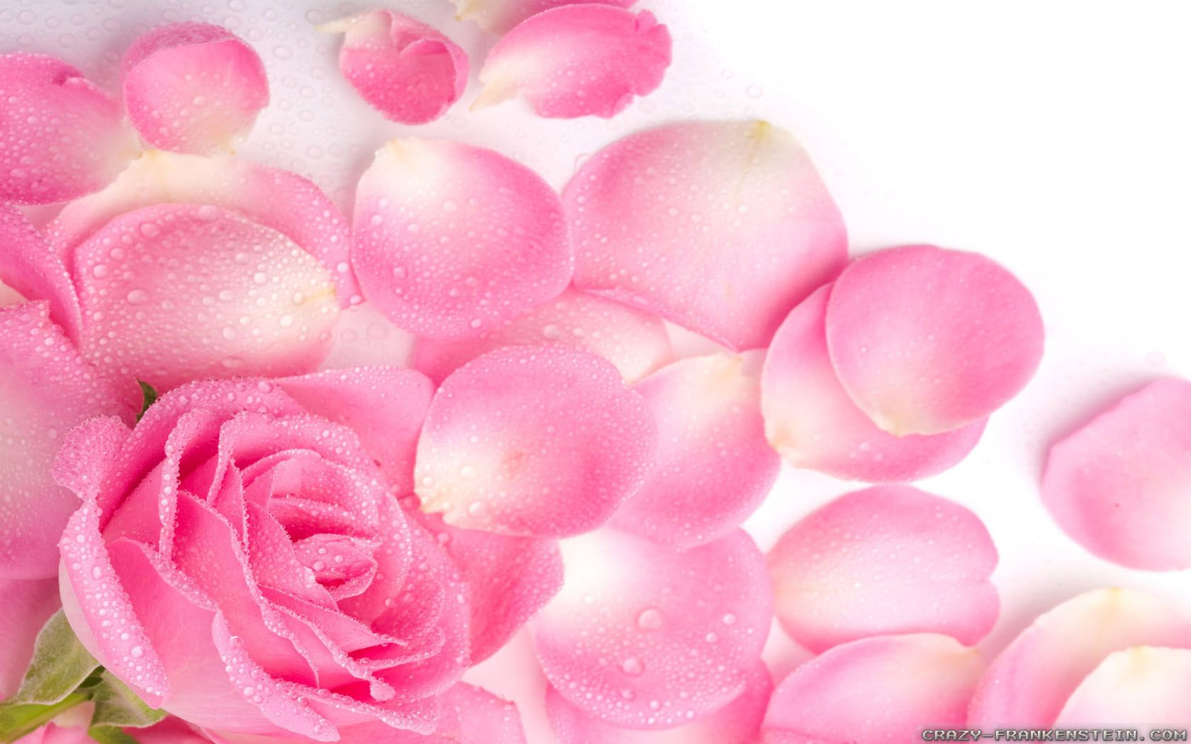 Aesthetic Rose Computer Wallpapers - Top Free Aesthetic Rose Computer Backgrounds - WallpaperAccess
