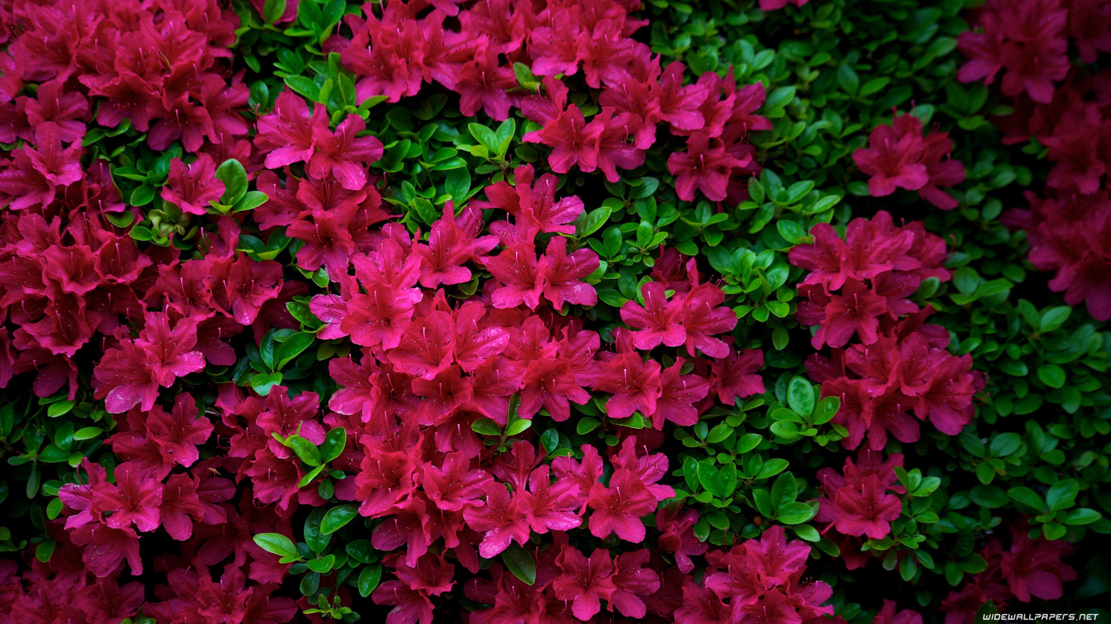 Ultra Hd Flower Wallpapers Top Free Ultra Hd Flower Backgrounds Wallpaperaccess