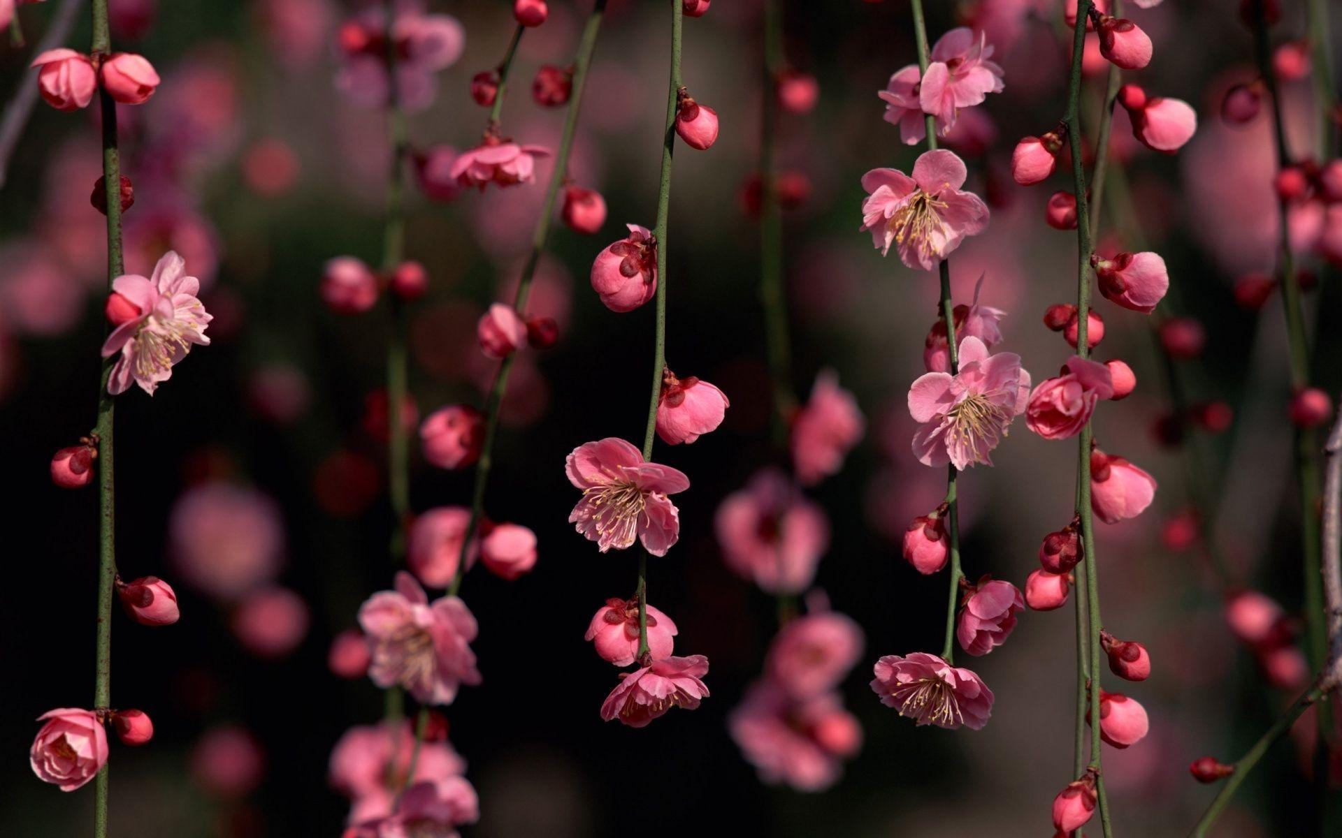 Ultra HD Flower Wallpapers , Top Free Ultra HD Flower