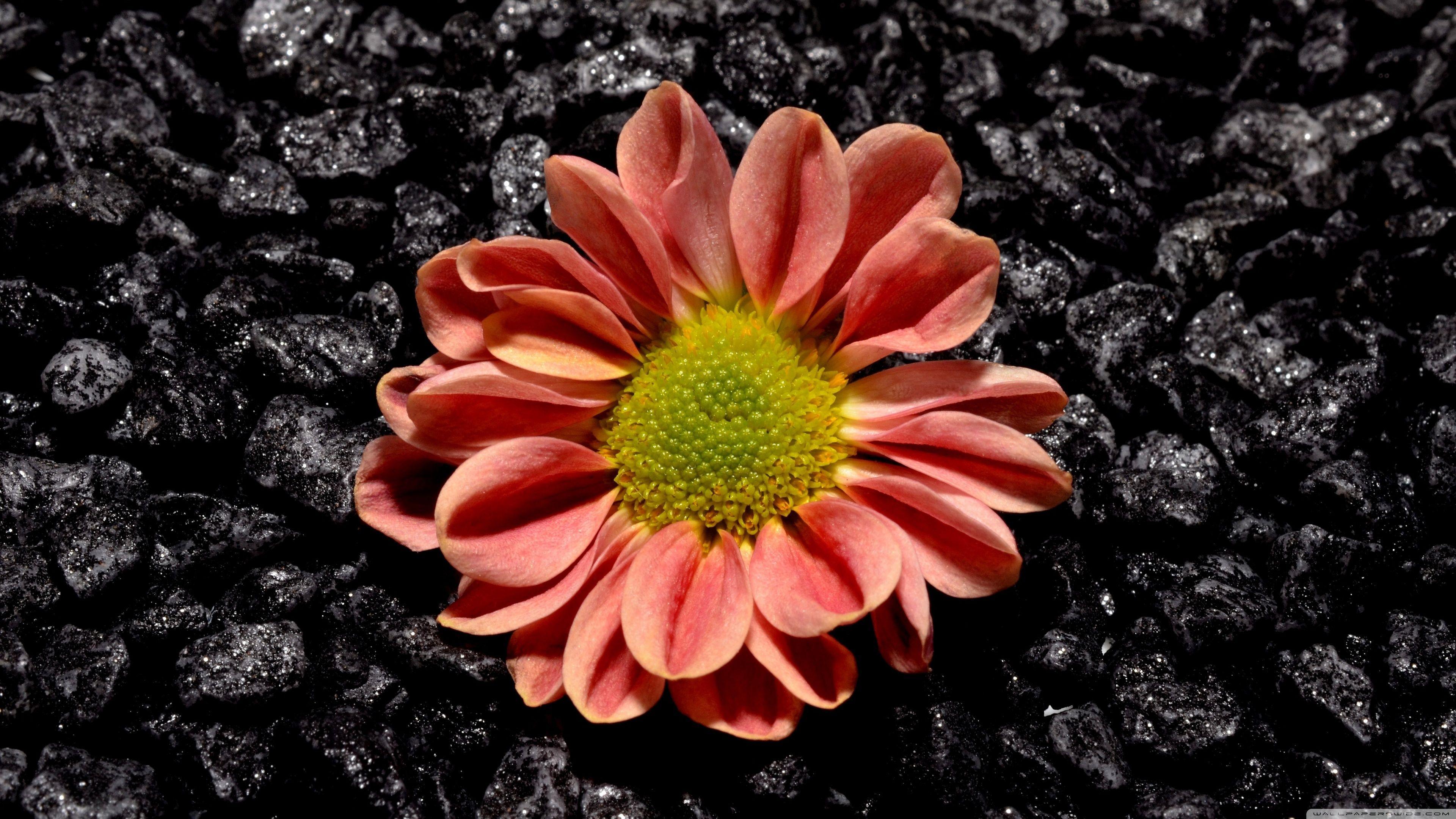Ultra HD Flower Wallpapers - Top Free Ultra HD Flower ...