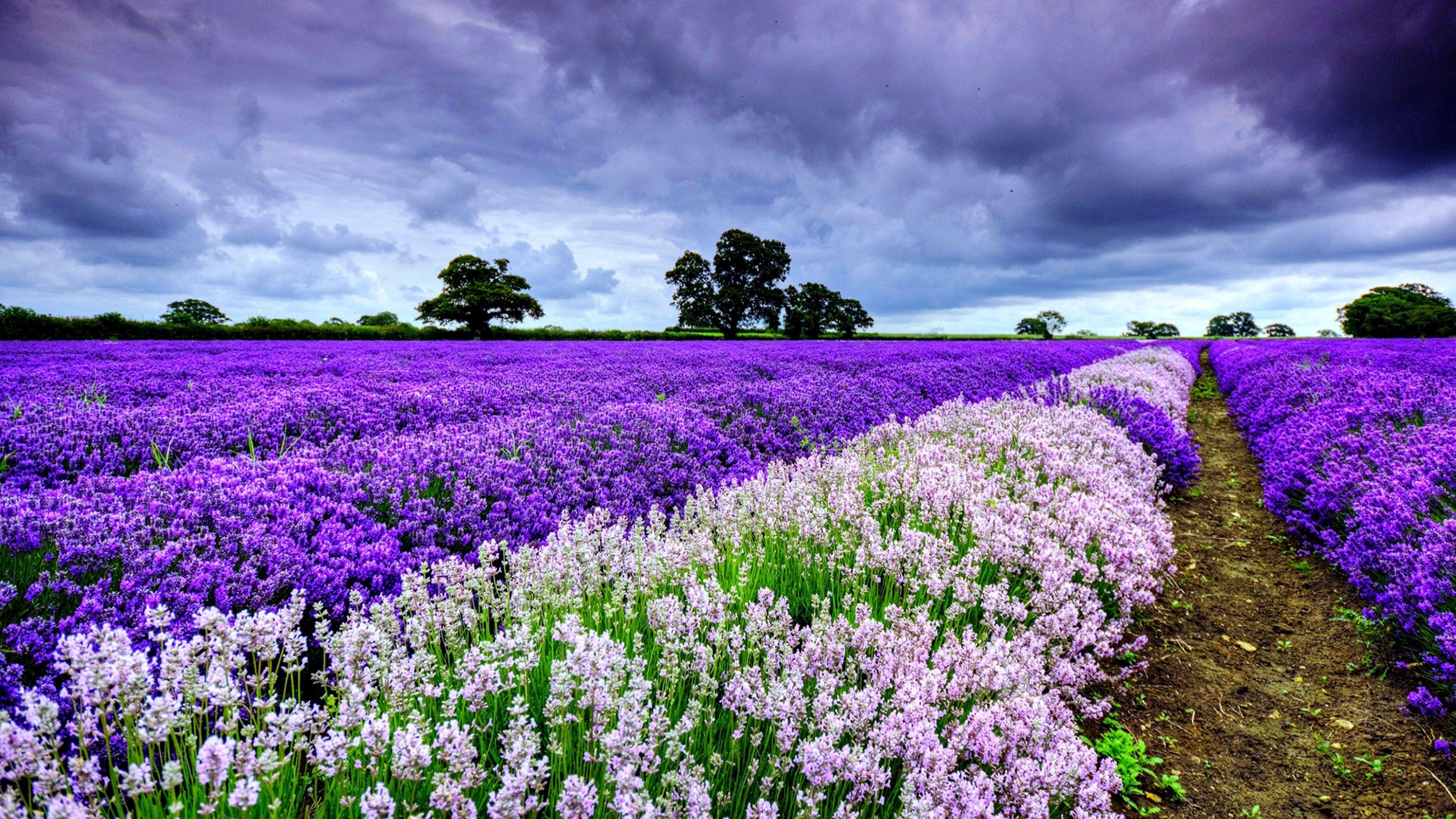 Ultra Hd Flower Wallpapers Top Free Ultra Hd Flower