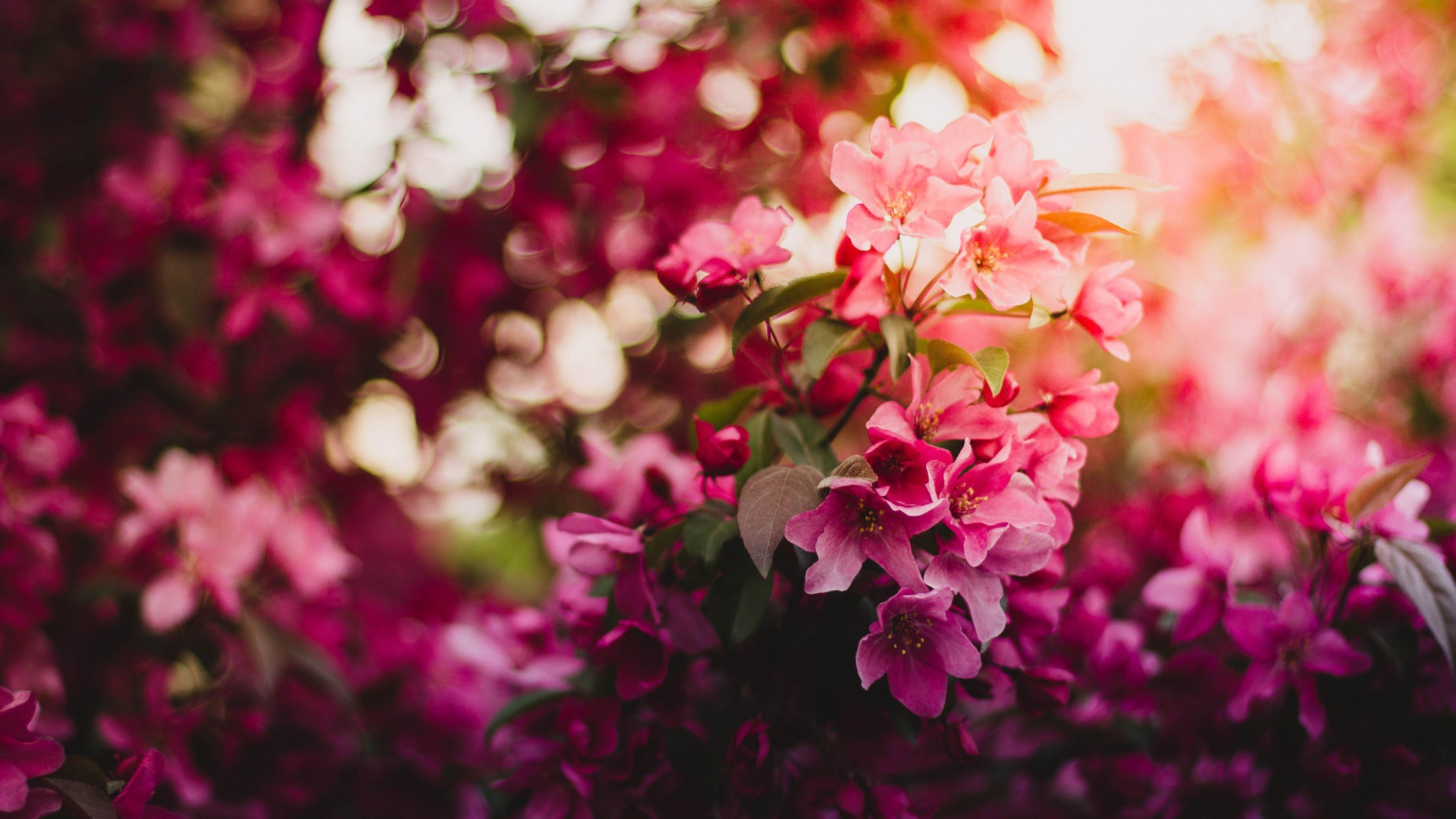 """2880x1800 Ultra HD Wallpaper, flower 4K   Nature flower garden love pink hd ..."""">"""