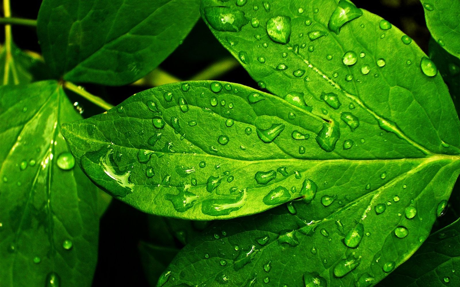 Cool Leaf Wallpapers Top Free Cool Leaf Backgrounds Wallpaperaccess