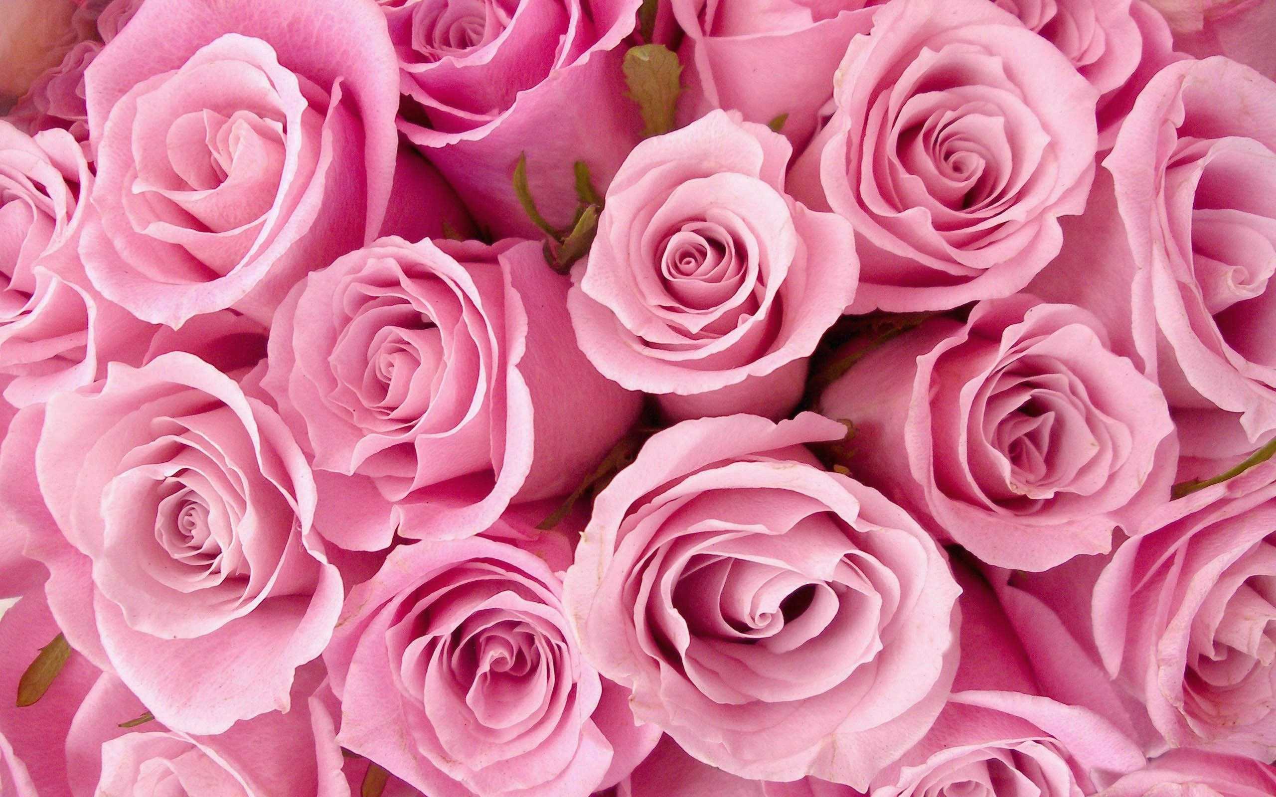 Rose Aesthetic Pc Wallpapers Top Free Rose Aesthetic Pc
