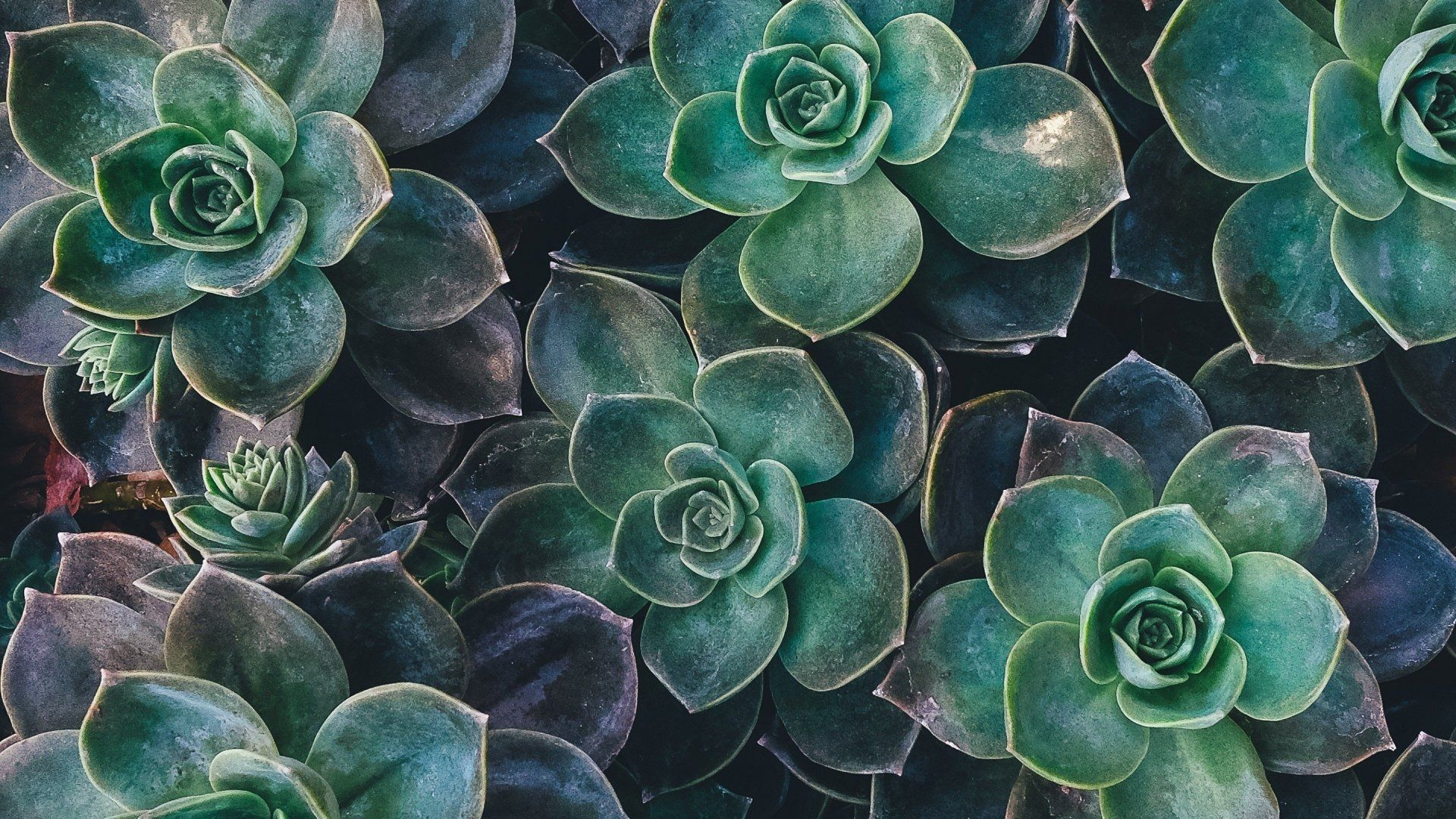 Plant Aesthetic Laptop Wallpapers - Top Free Plant ...