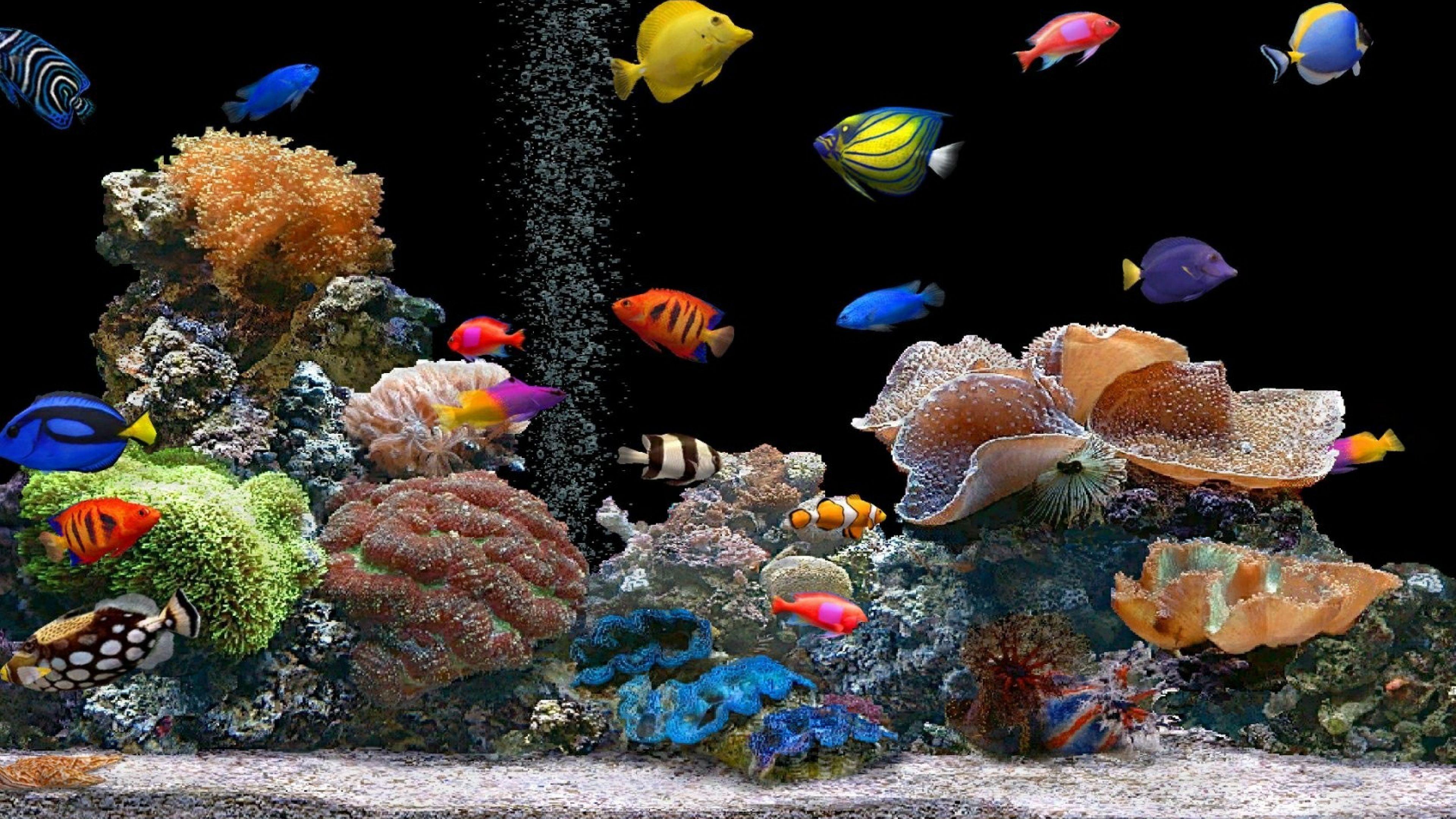 Aquarium 4K UHD Wallpapers - Top Free