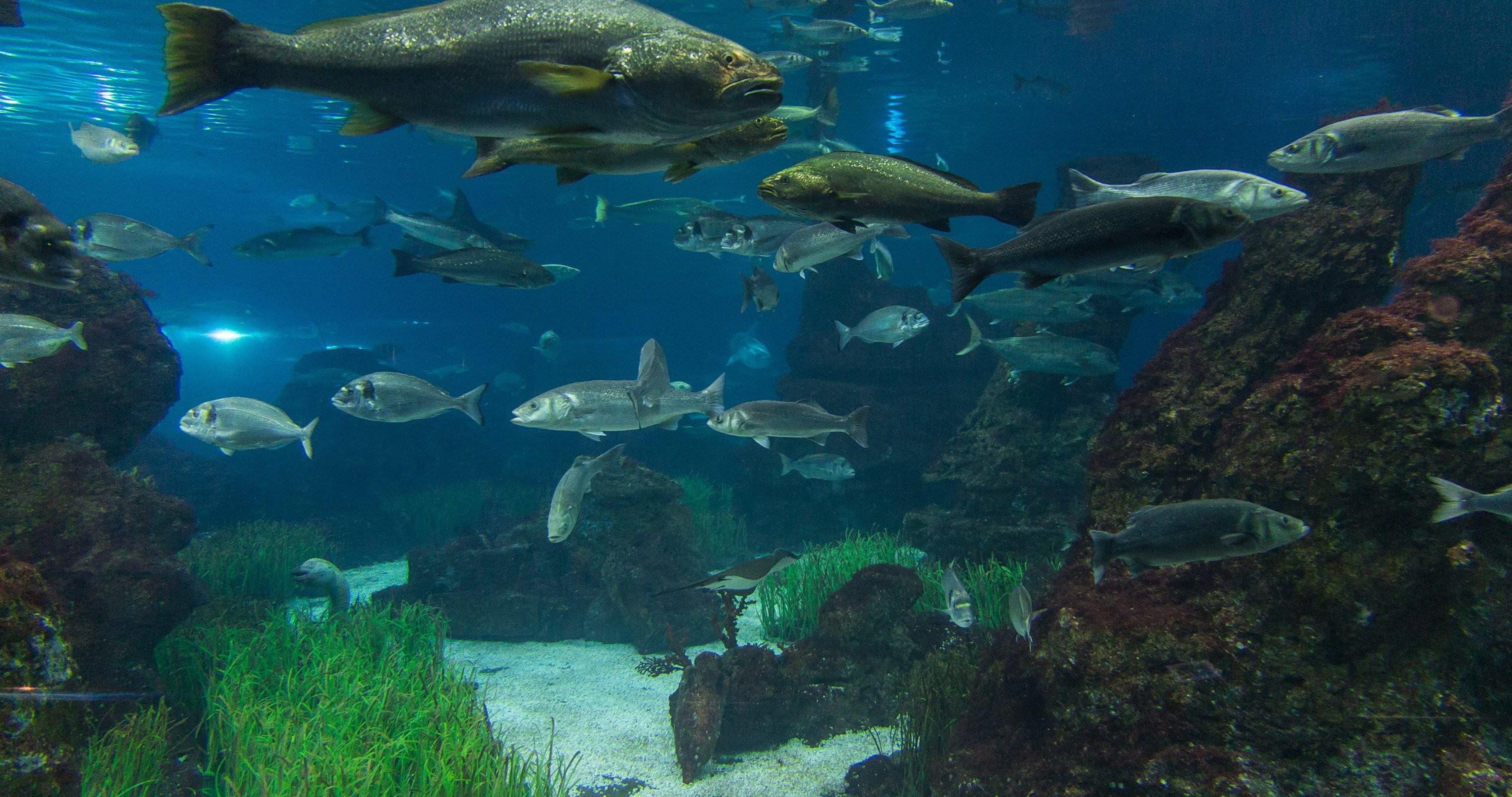 4k Ultra Hd Fish Wallpapers Top Free 4k Ultra Hd Fish Backgrounds