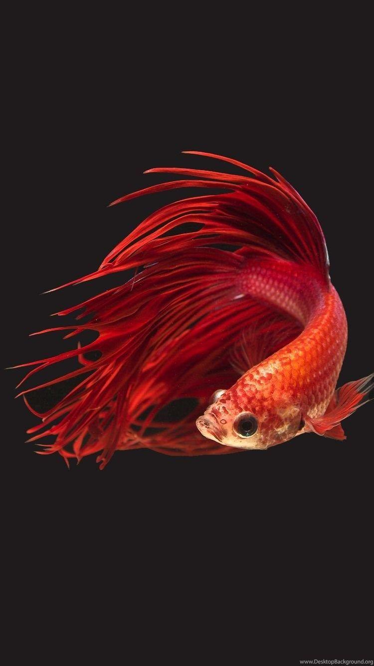 4K Ultra HD Fish Wallpapers - Top Free 4K Ultra HD Fish ...