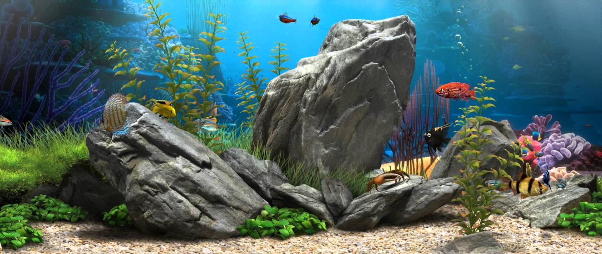 Fish Tank Wallpapers - Top Free Fish