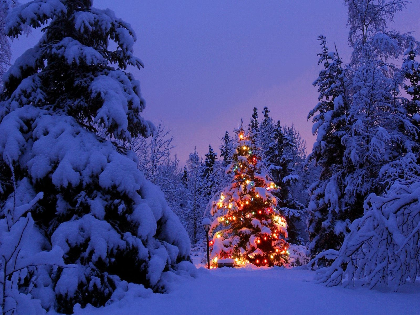 Christmas Forest Wallpapers Top Free Christmas Forest Backgrounds Wallpaperaccess