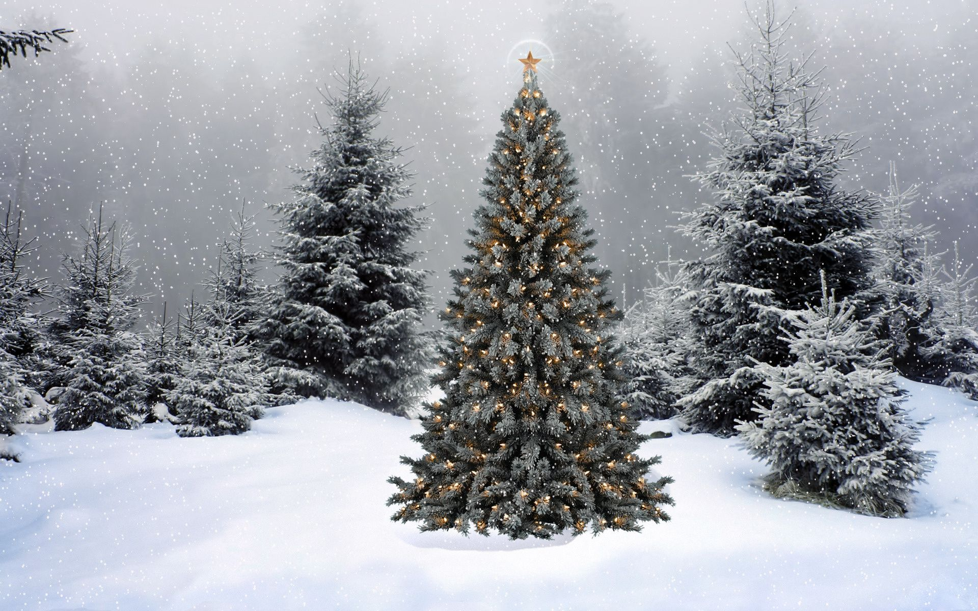 Christmas Tree Snow.Christmas Forest Wallpapers Top Free Christmas Forest