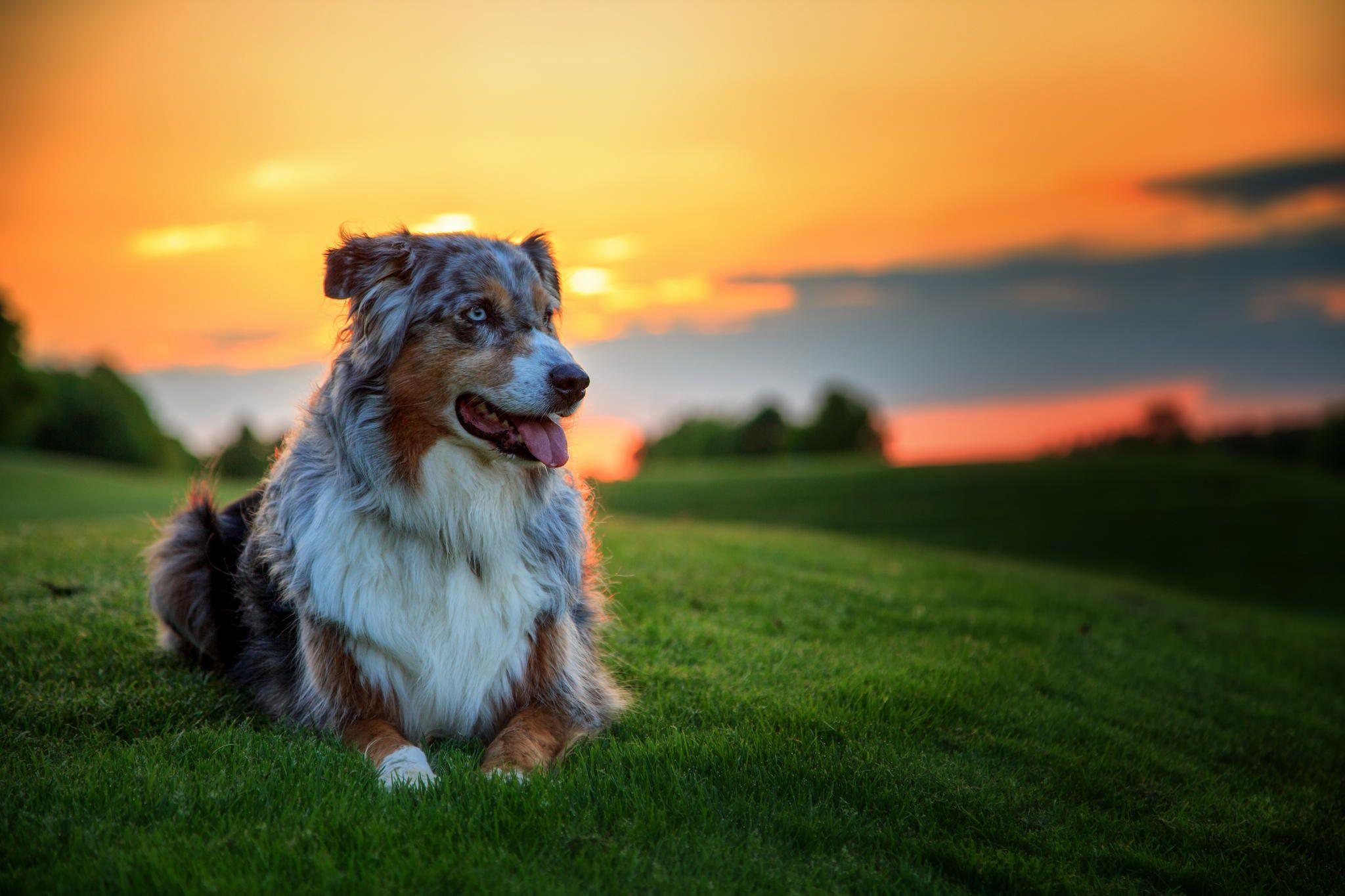 4K Dog Wallpapers - Top Free 4K Dog ...