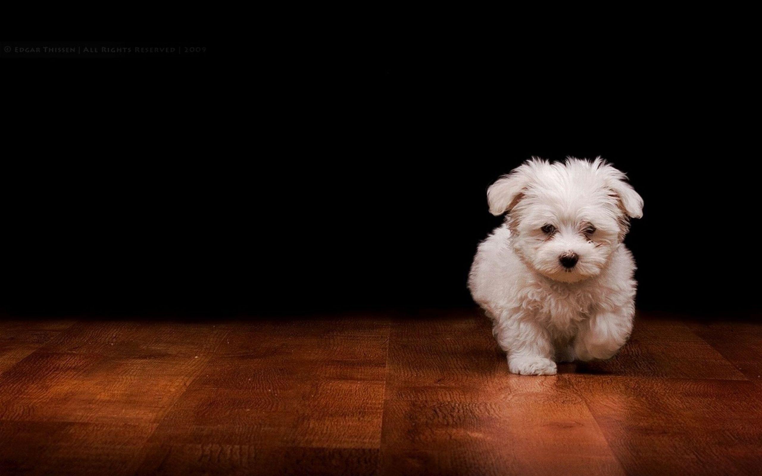 White Dog Wallpapers Wallpaper