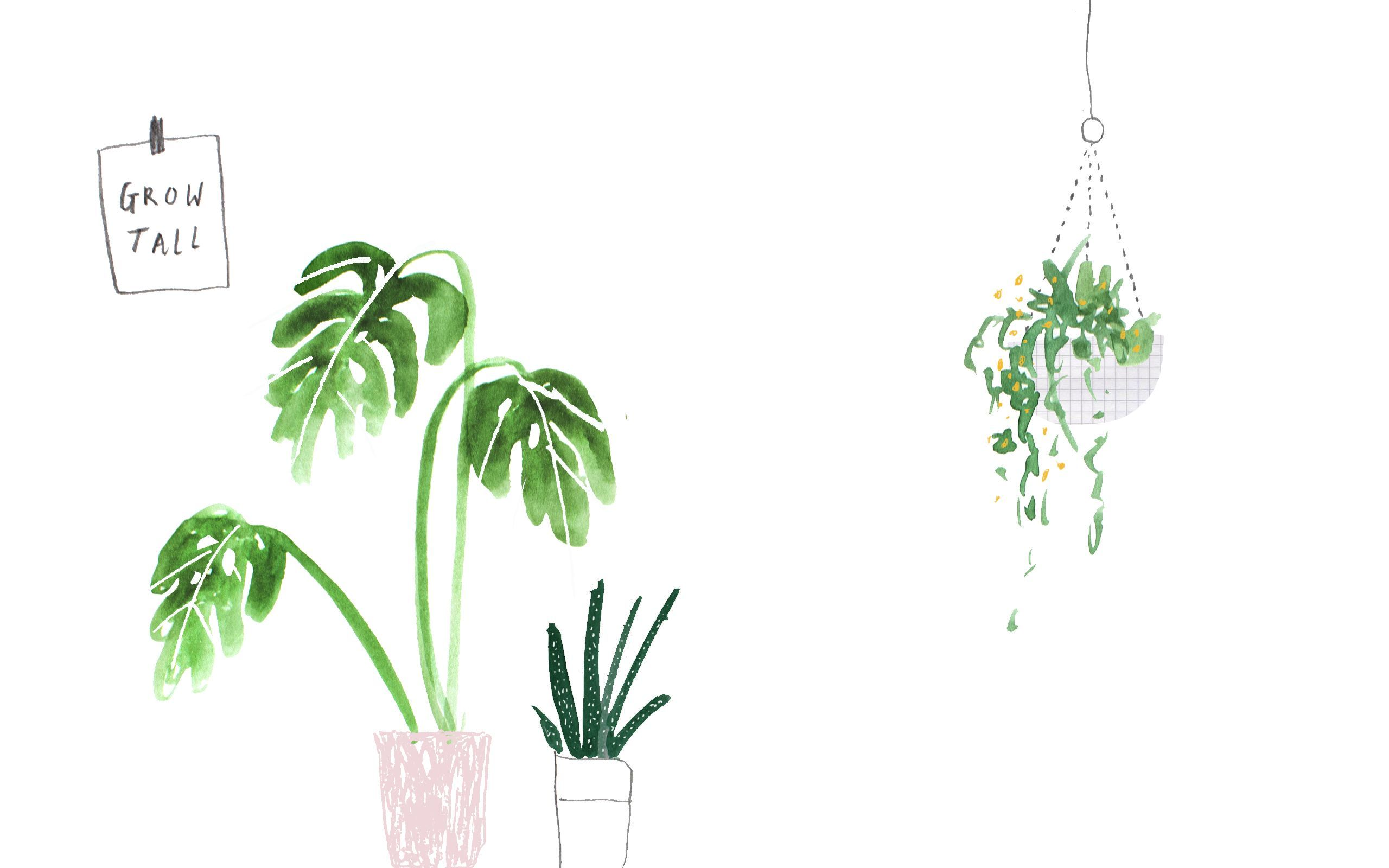 plant aesthetic desktop wallpapers