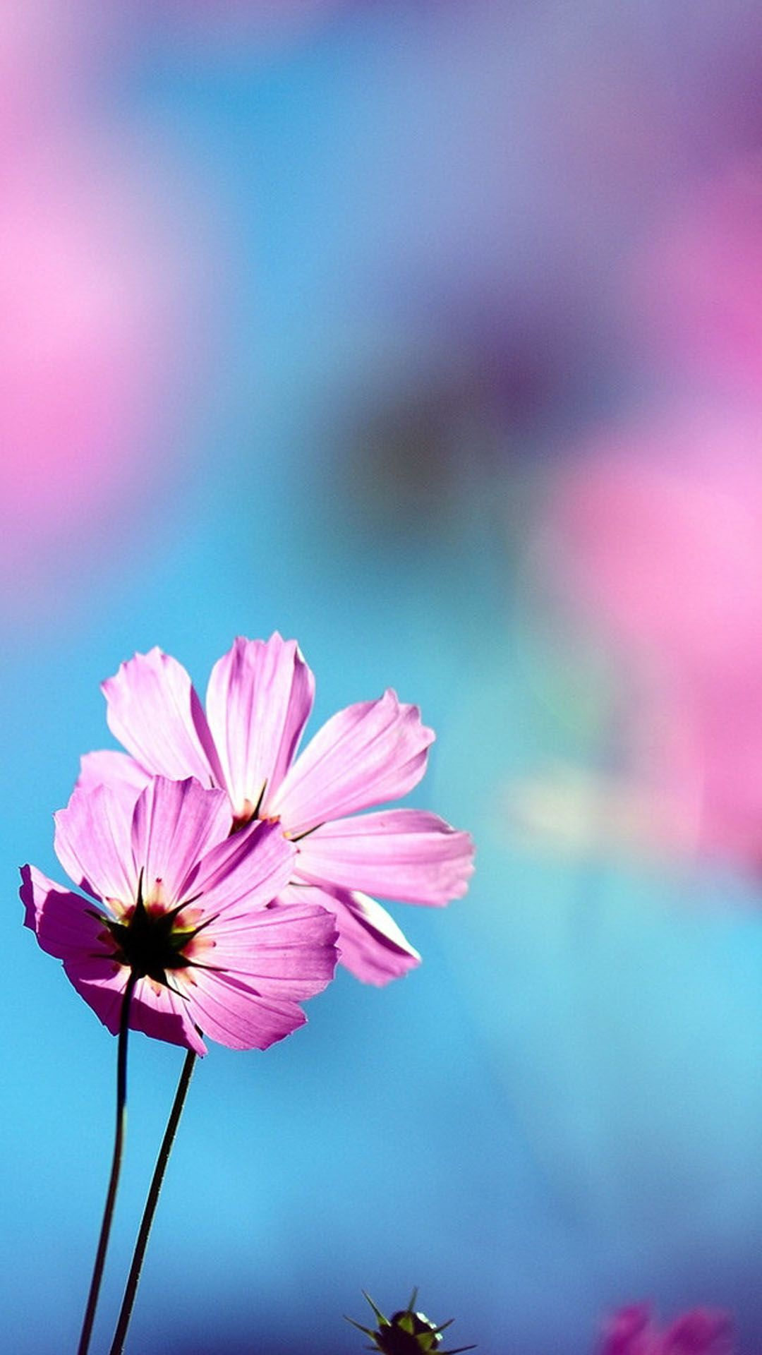 Flowers Phone Wallpapers Top Free Flowers Phone Backgrounds