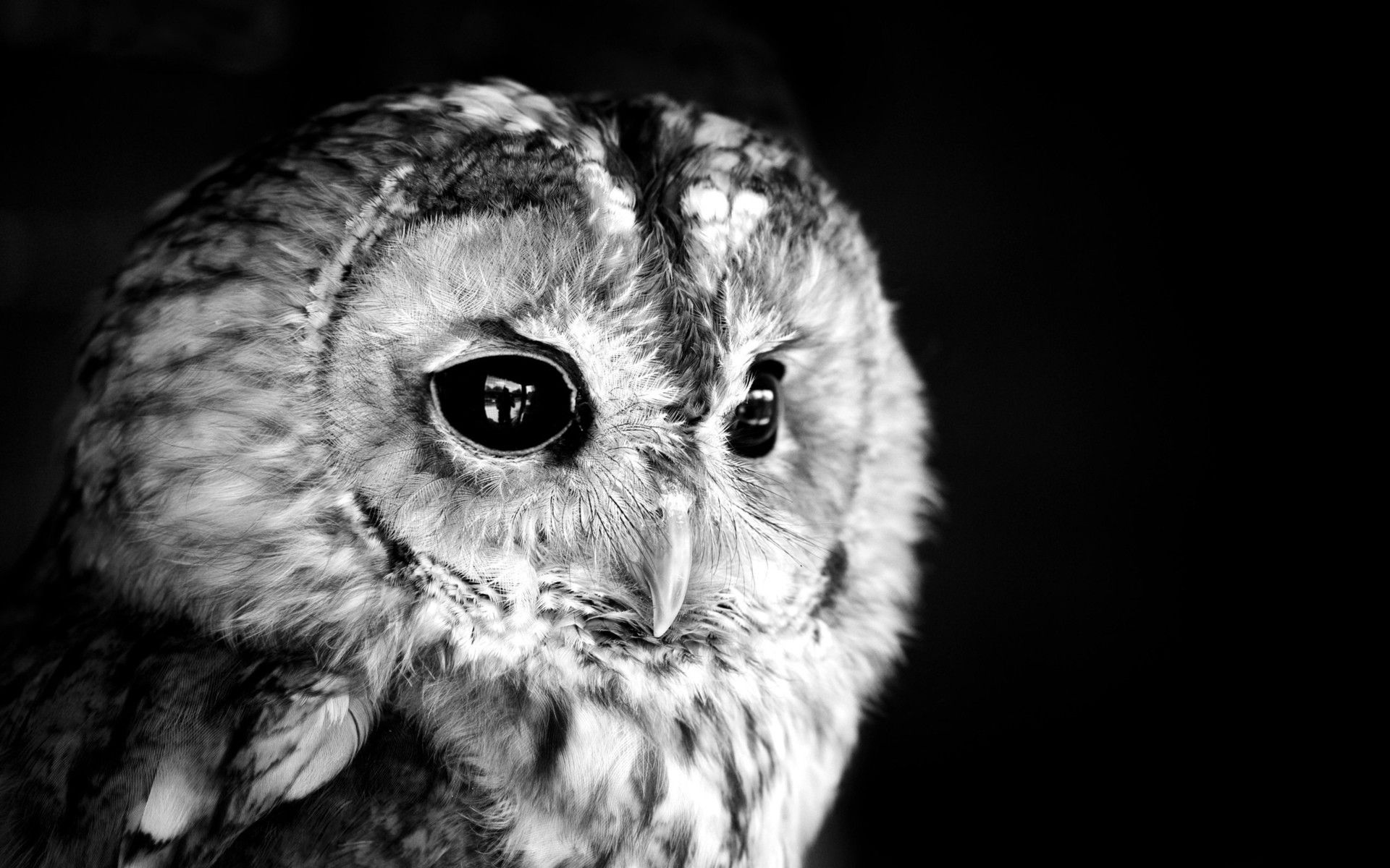 owl background birds owls monochrome desktop grayscale animal wallpapers macro feathers backgrounds animals protector mono eyes flickr incredible photographyblogger goddess