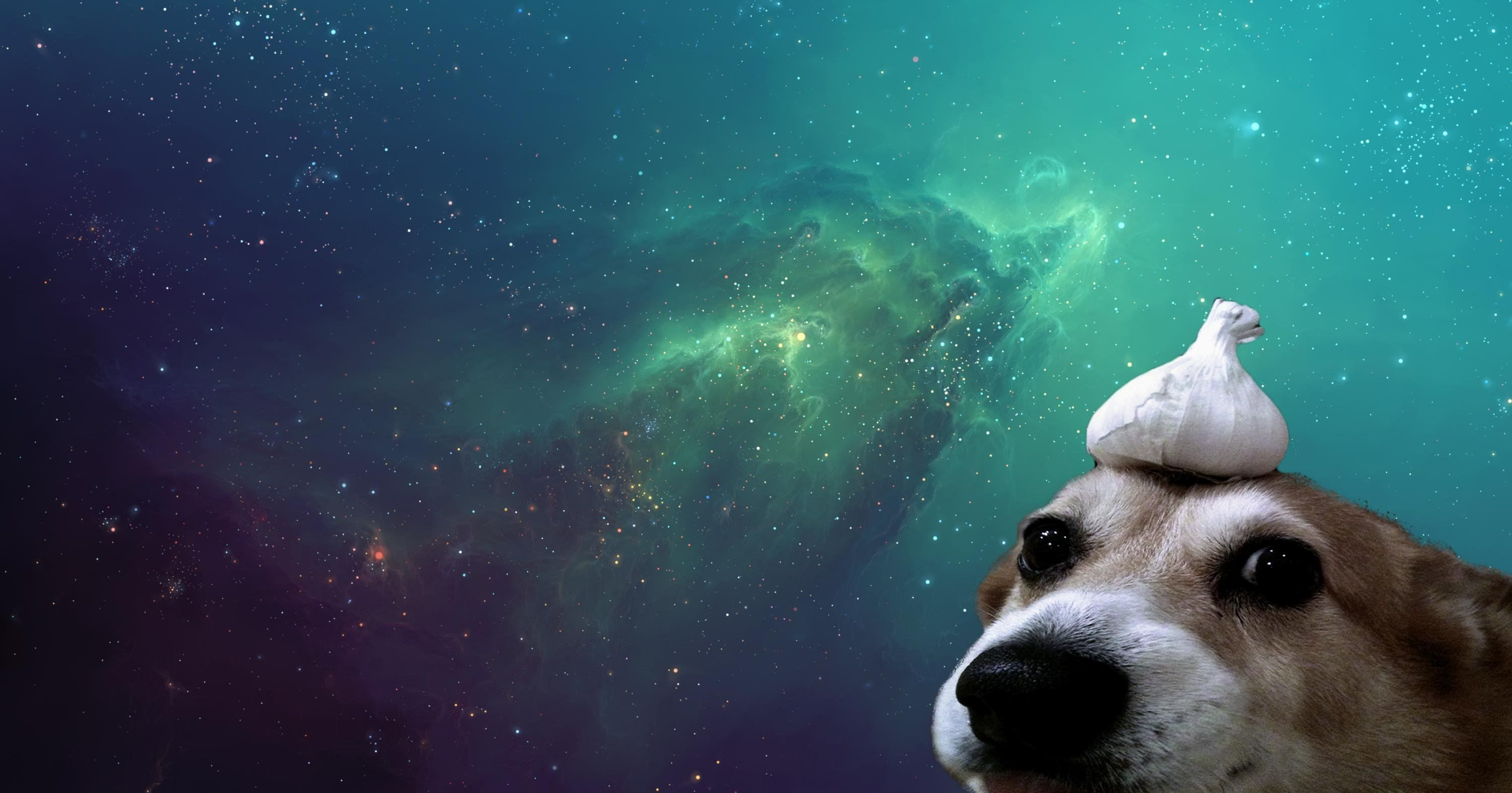 Dog Aesthetic Wallpapers Top Free Dog Aesthetic Backgrounds Wallpaperaccess
