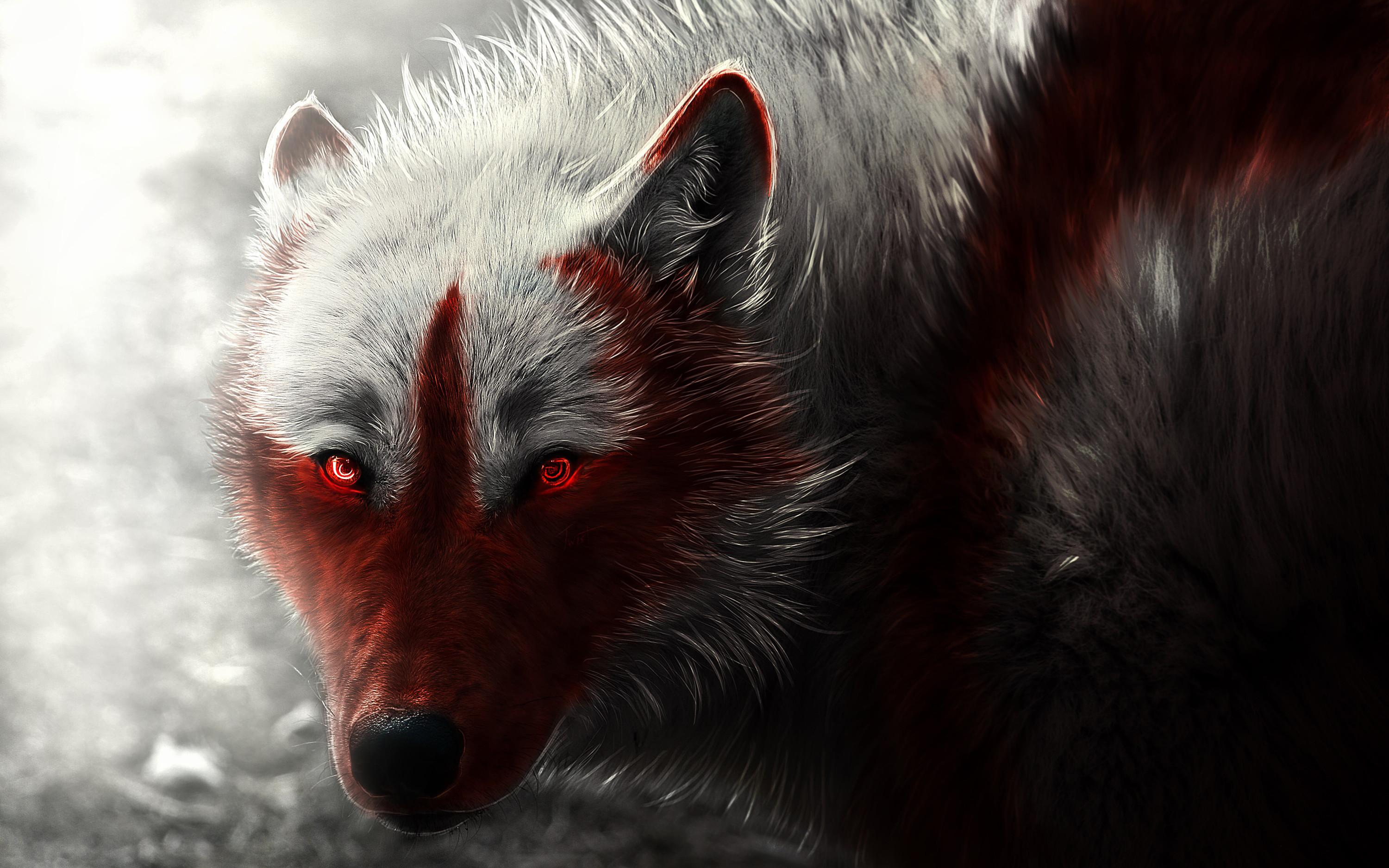 58 best free fox and wolf wallpapers wallpaperaccess