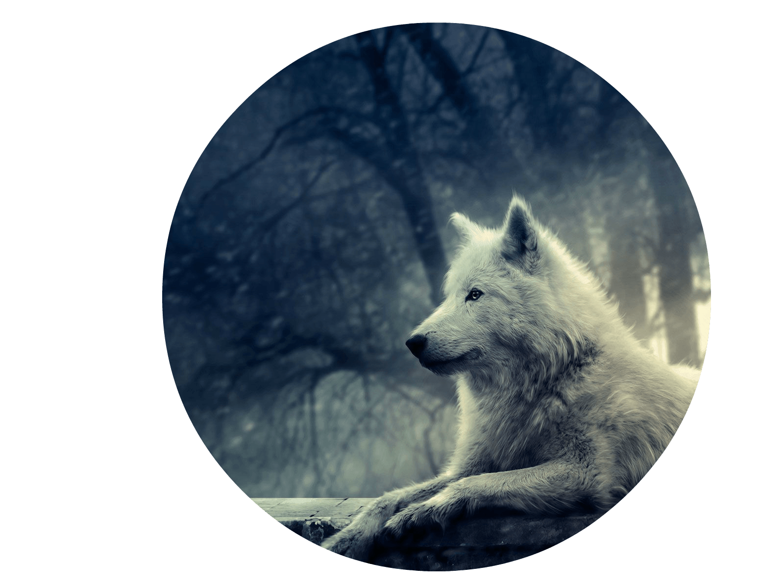 Fox And Wolf Wallpapers Top Free Fox And Wolf Backgrounds