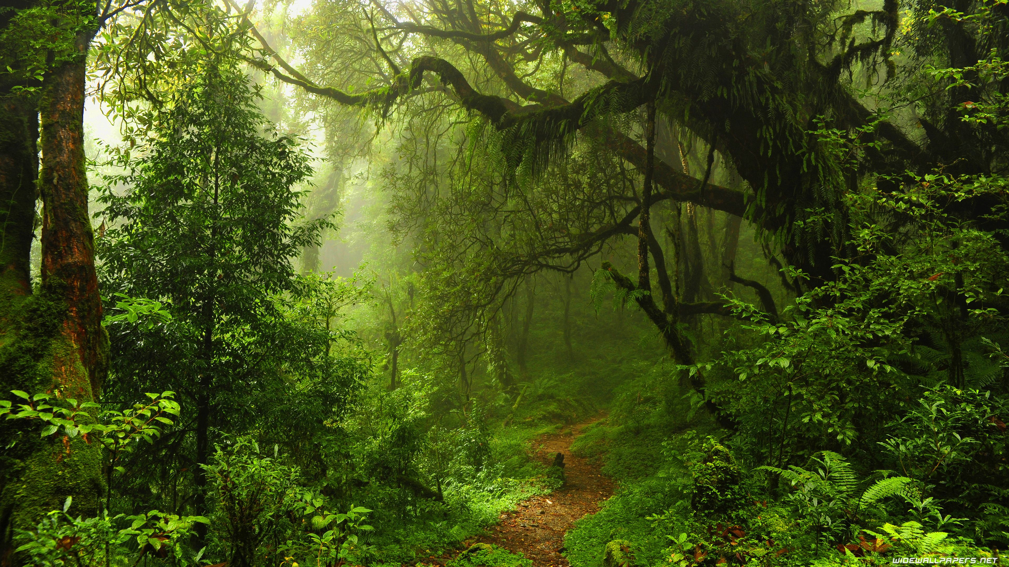 Ultra Hd Forest Wallpapers Top Free Ultra Hd Forest