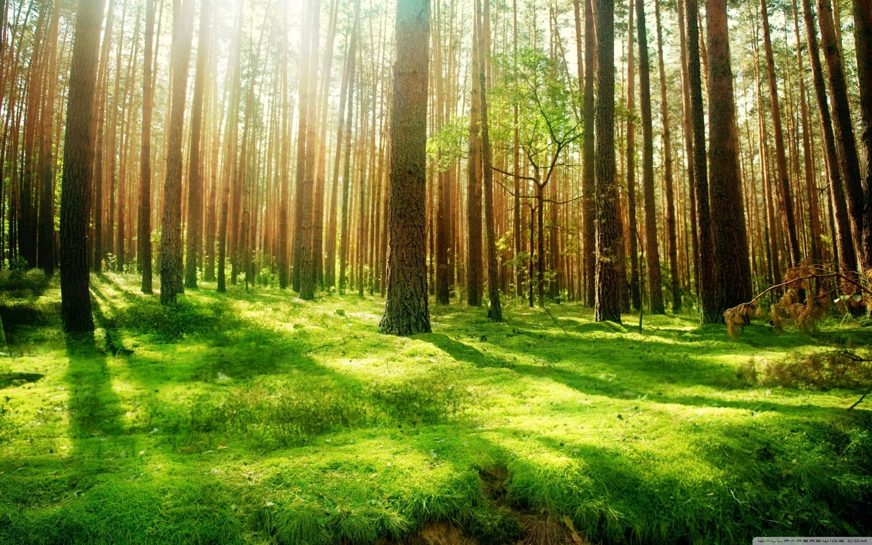 Forest png hd
