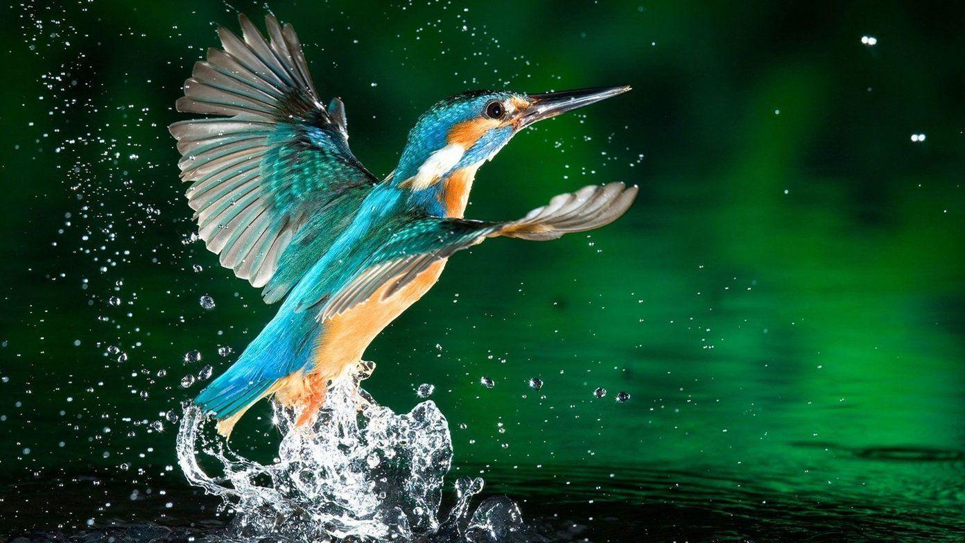 Wild Bird Wallpapers Top Free Wild Bird Backgrounds Wallpaperaccess